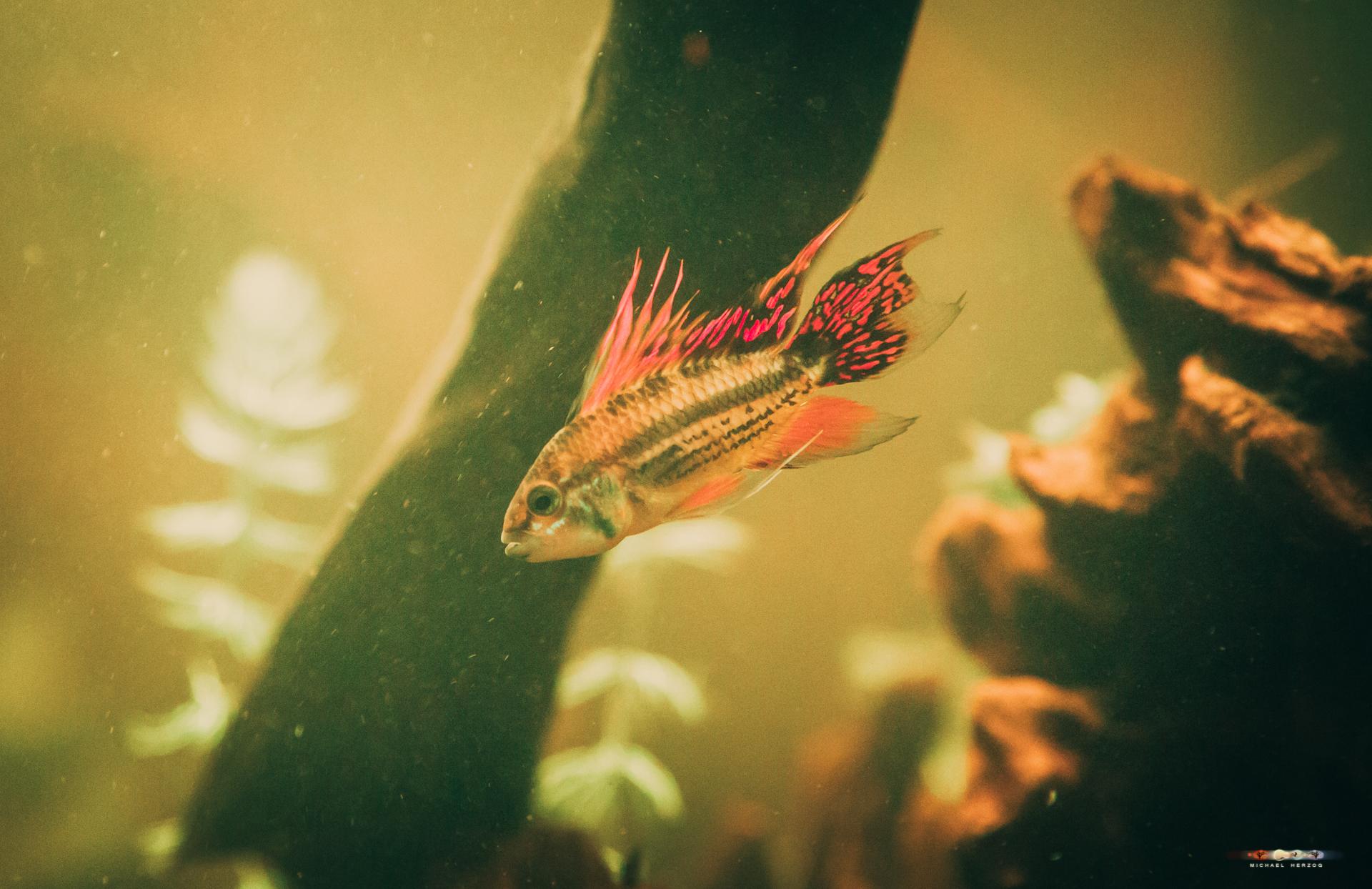 Aquarium-4486.jpg