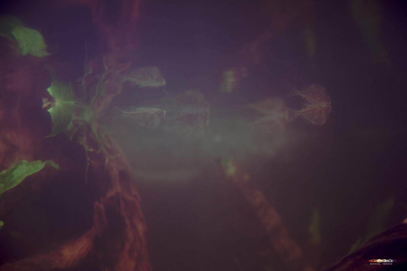 aquarium-2327.jpg