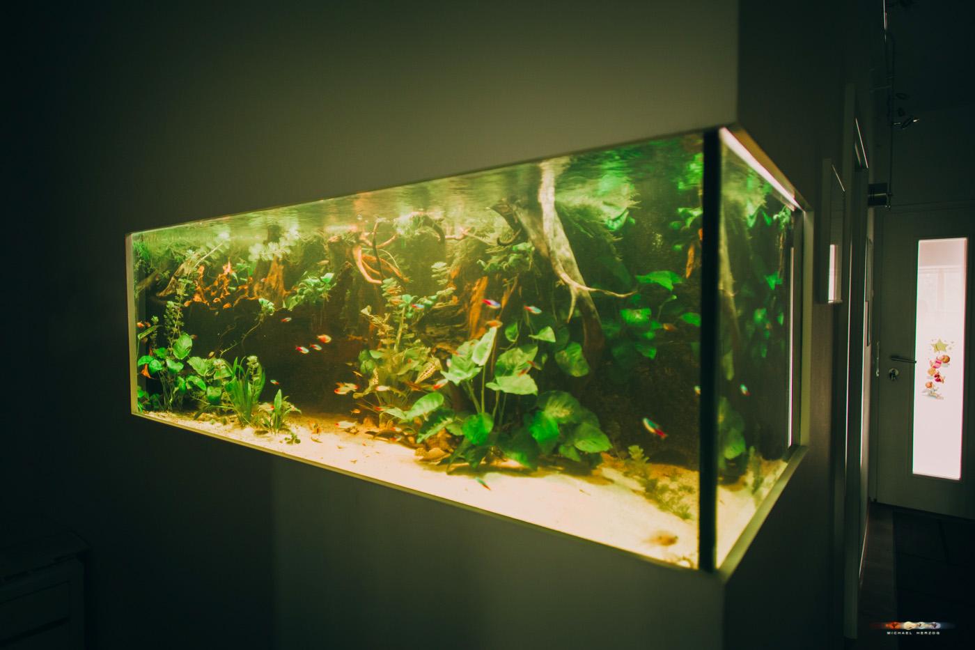 aquarium-3513-2.jpg