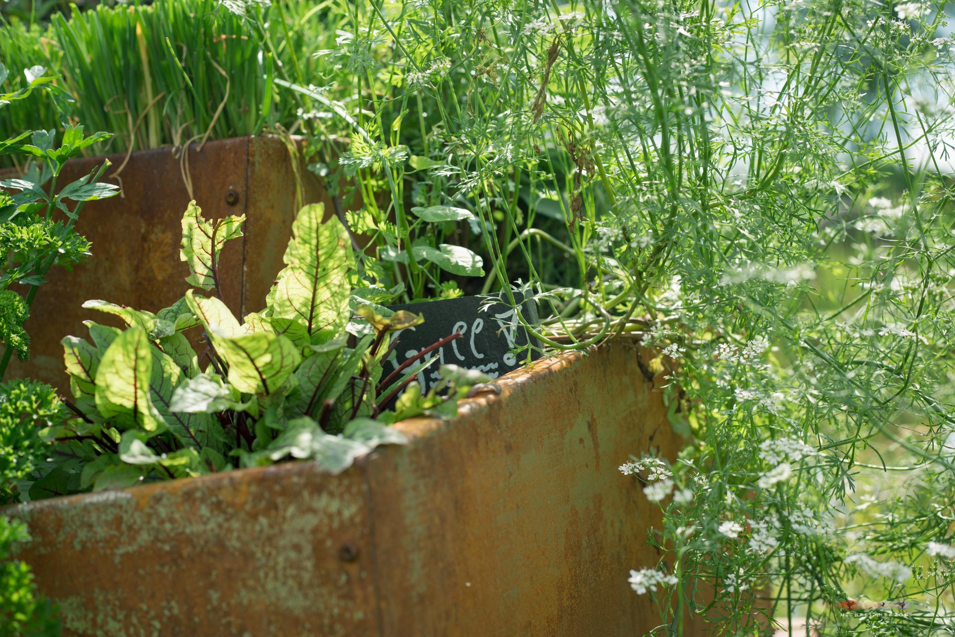 Garten_MichaelHerzog-1448.jpg