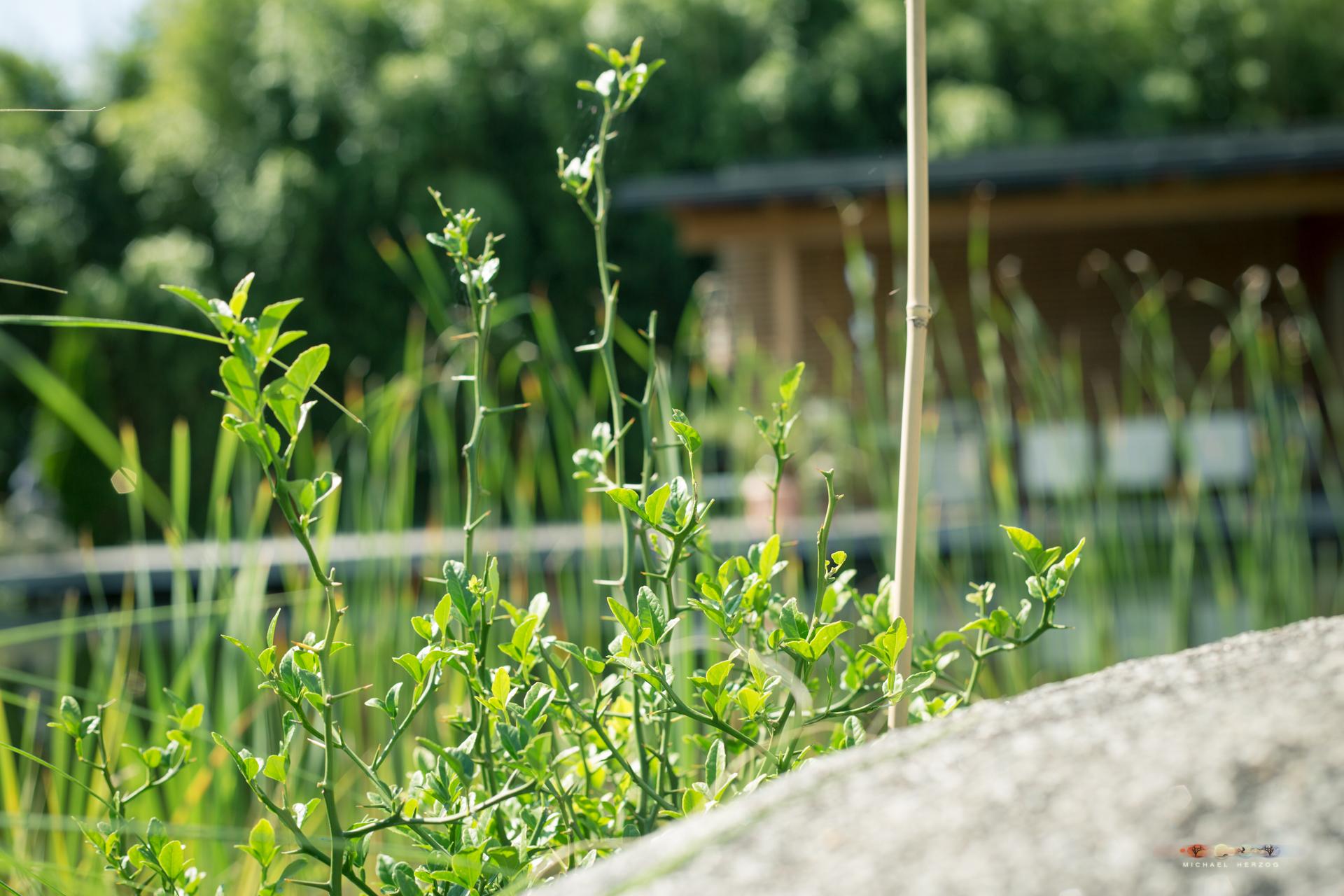 Garten_MichaelHerzog-1460.jpg