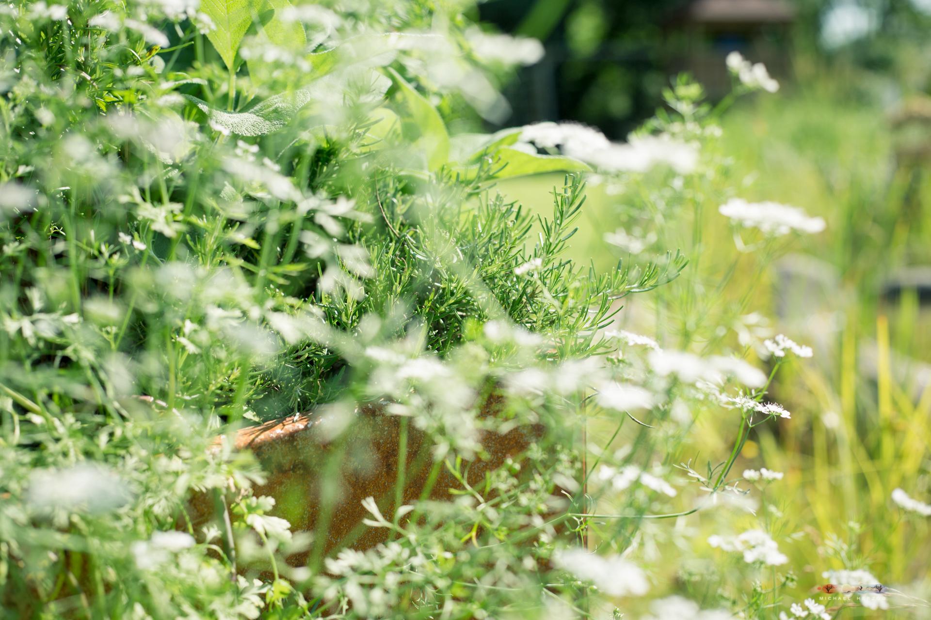 Garten_MichaelHerzog-1510.jpg