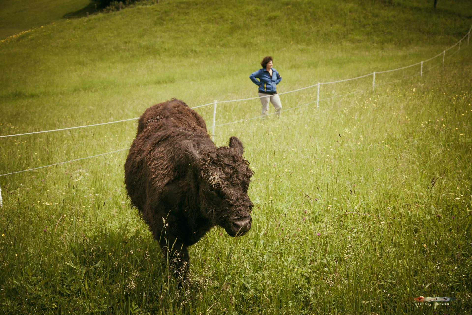 Unken-Kühe-Einzug-2016_MichaelHerzog-0180.jpg