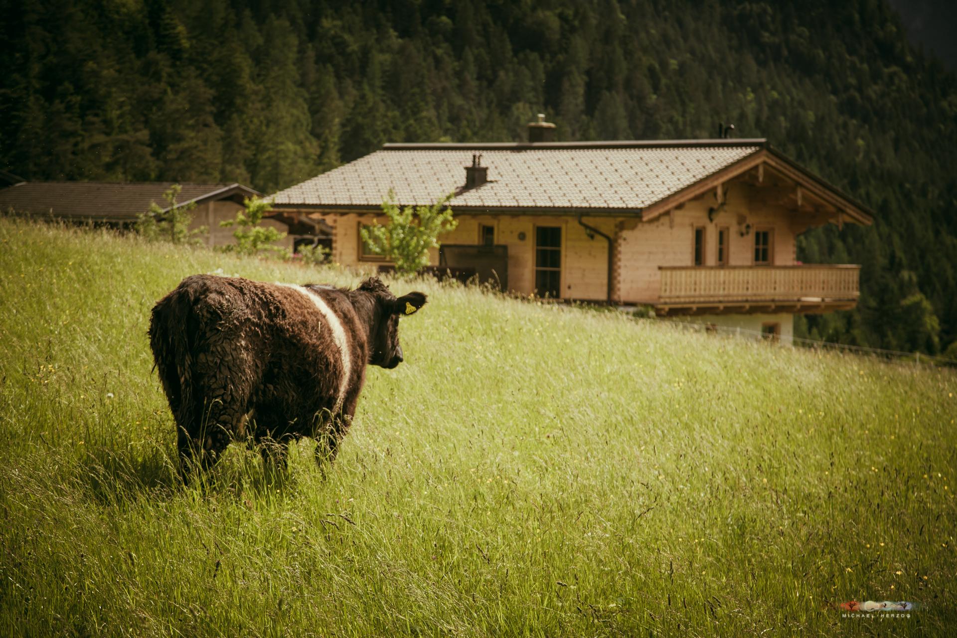 Unken-Kühe-Einzug-2016_MichaelHerzog-0318.jpg
