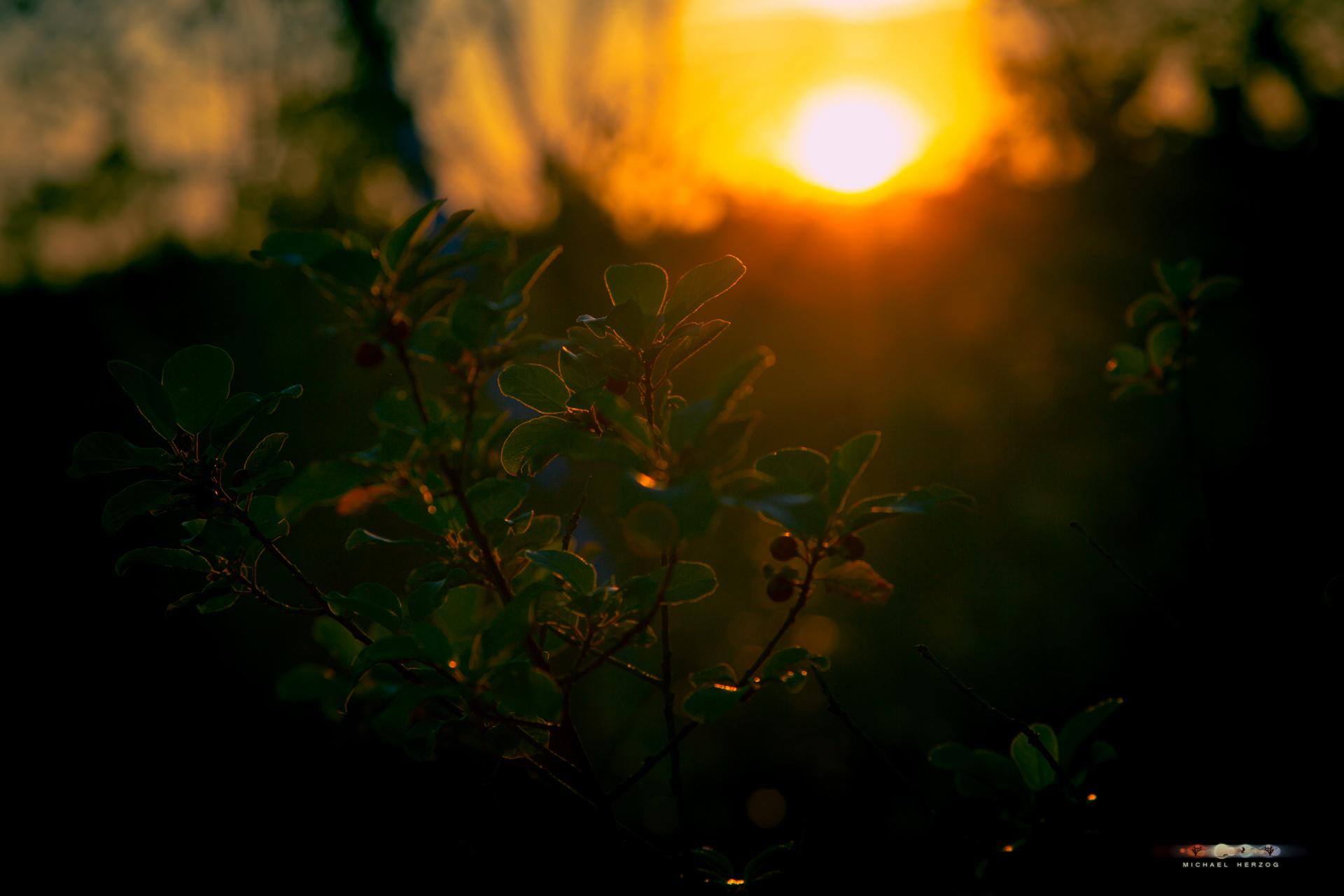 Sonnenuntergang_ibmerMoor_MichaelHerzog.jpg