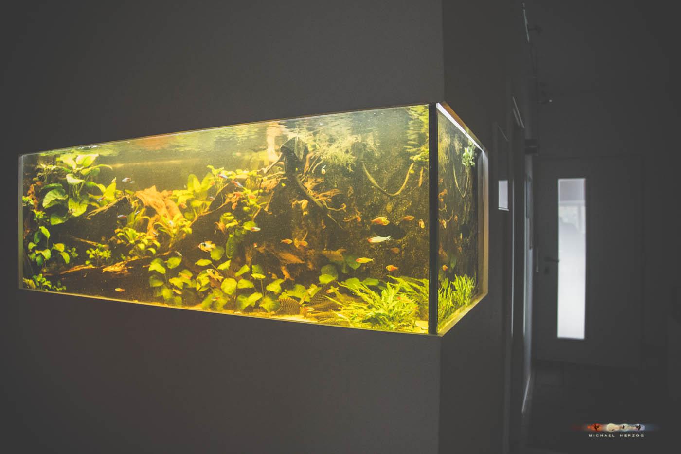 Aquarium_MichaelHerzog-5096.jpg