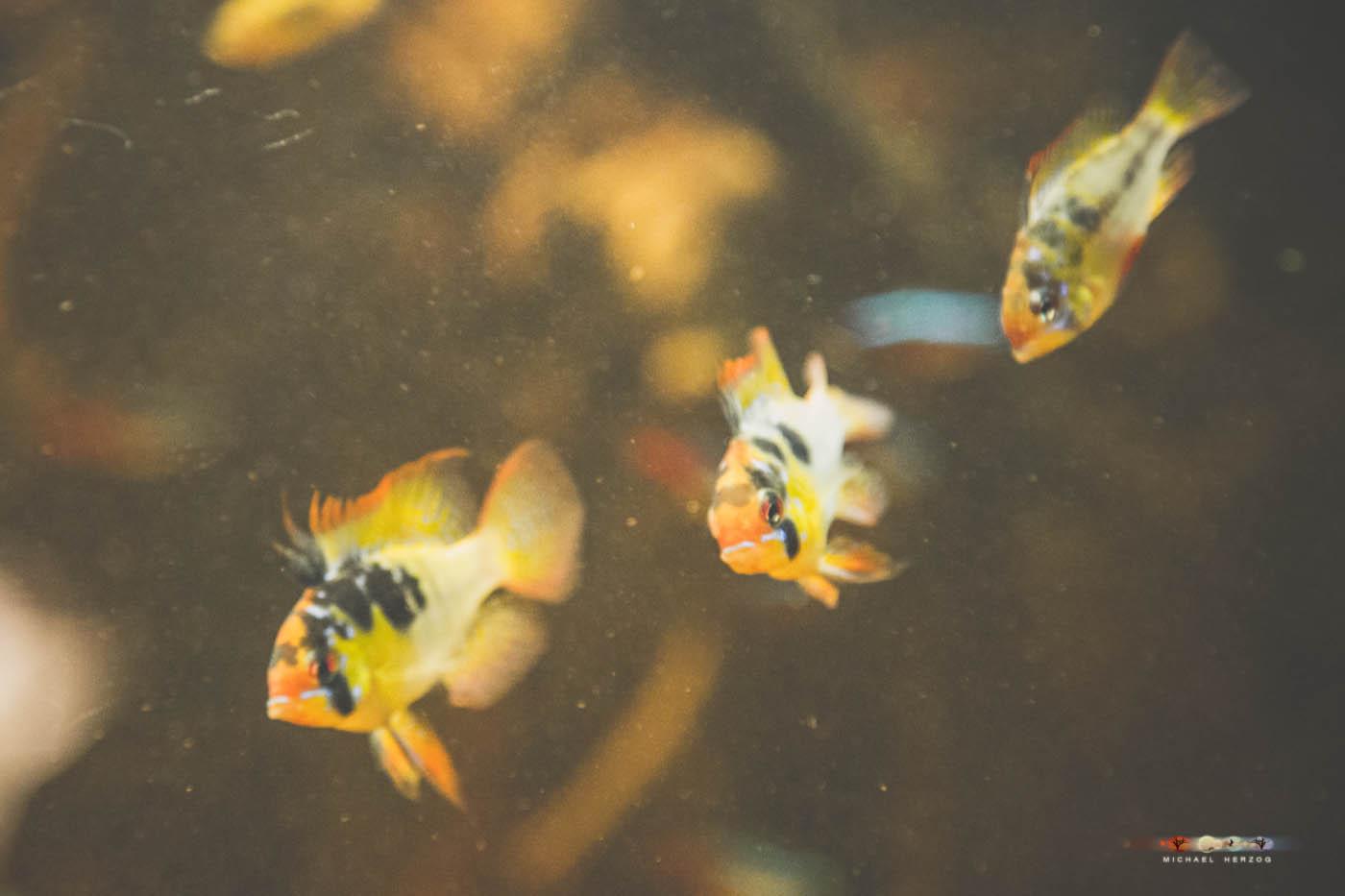 Aquarium_MichaelHerzog-5117.jpg