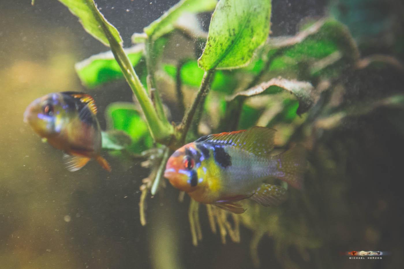 Aquarium_MichaelHerzog-5174.jpg