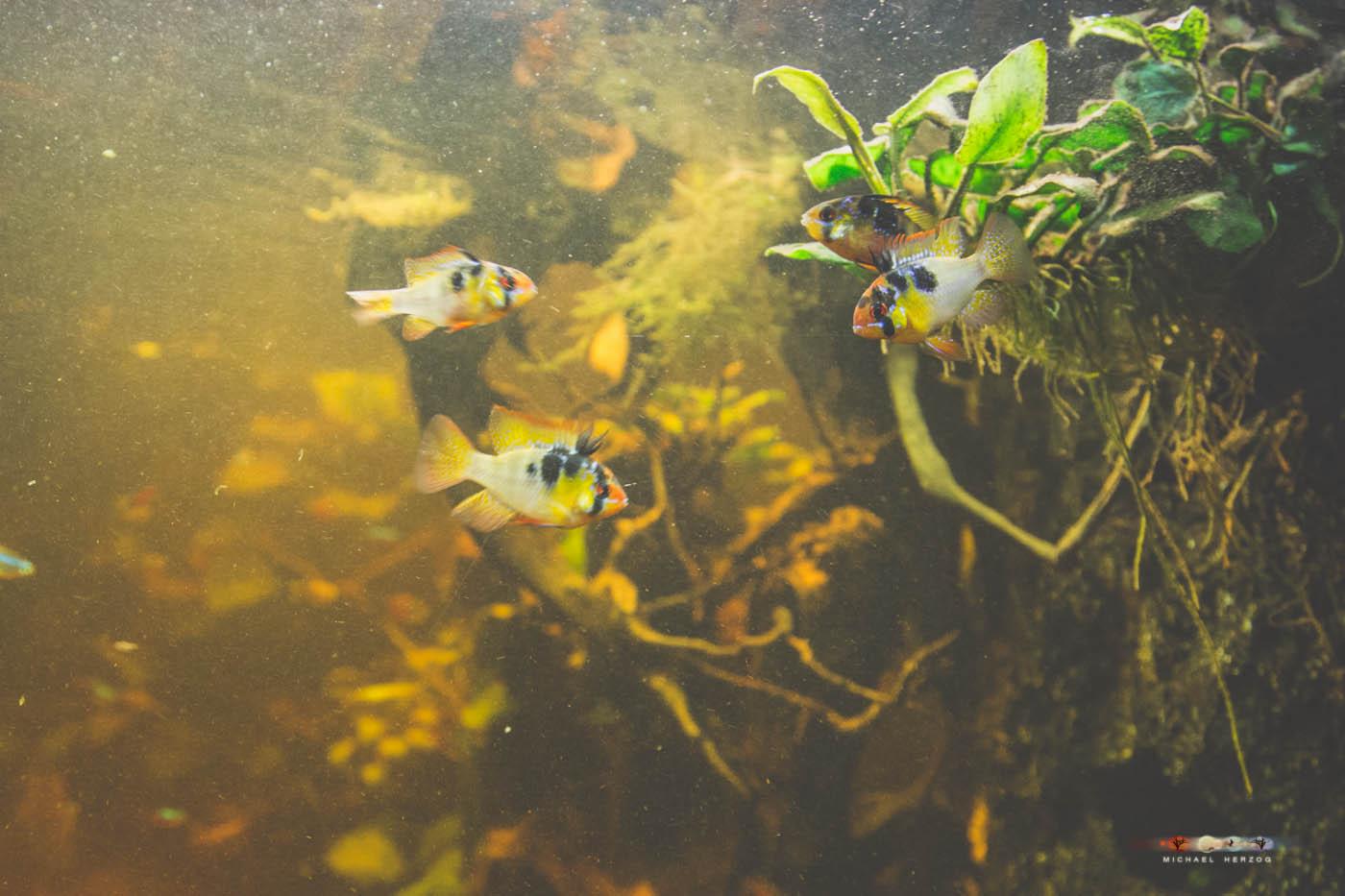 Aquarium_MichaelHerzog-5217.jpg