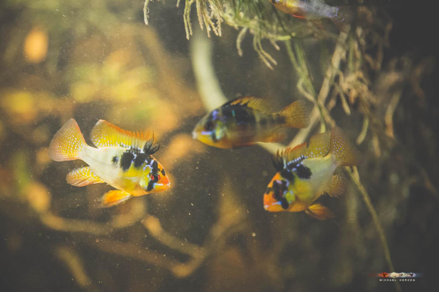 Aquarium_MichaelHerzog-5227.jpg