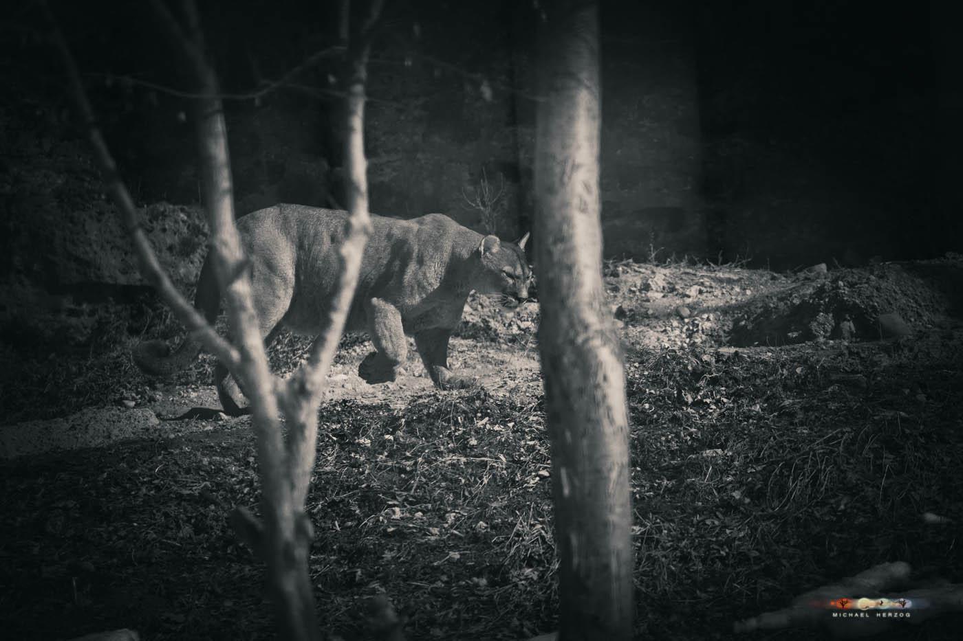 Zoo_Salzburg_MichaelHerzog-7181.jpg