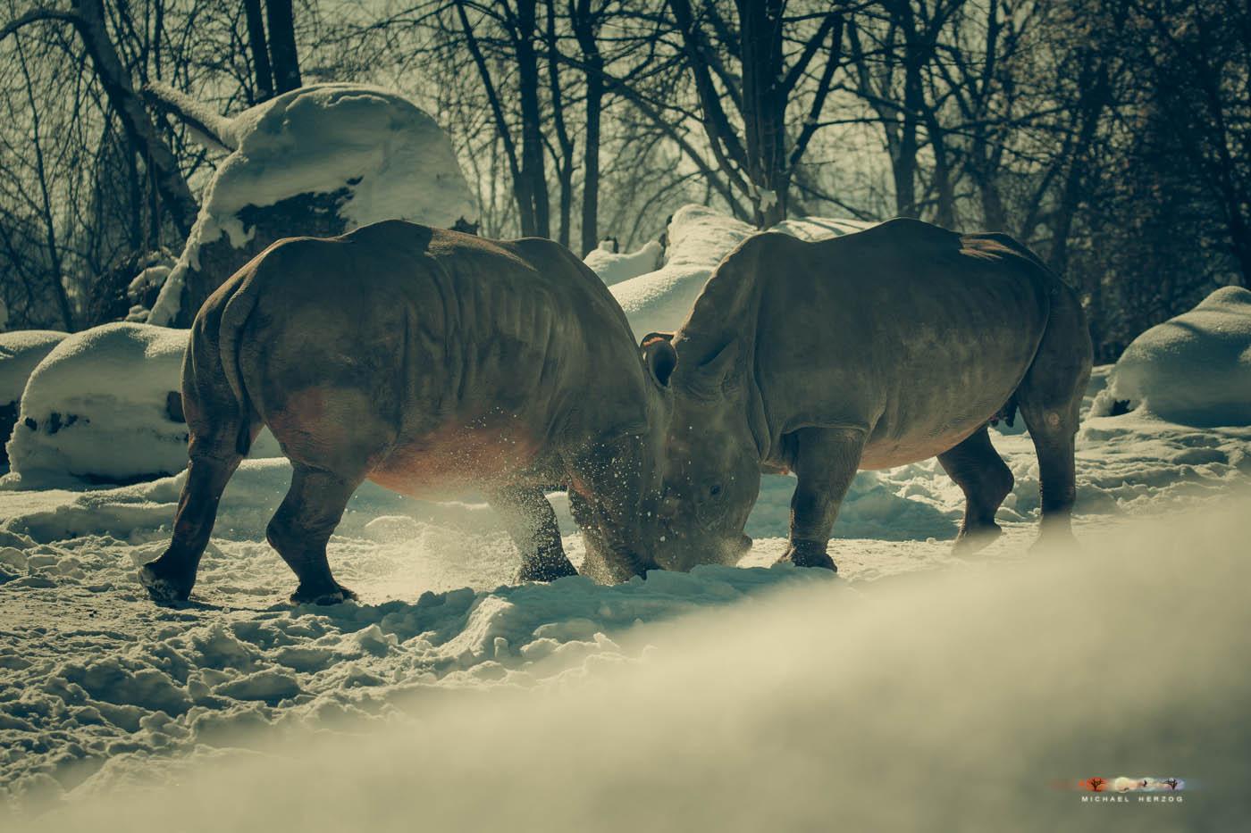 Zoo_Salzburg_MichaelHerzog-7450.jpg