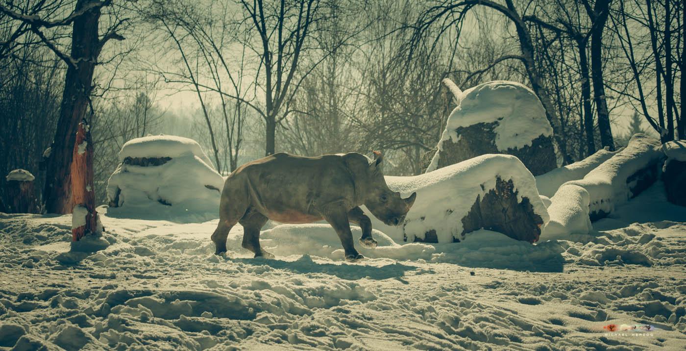 Zoo_Salzburg_MichaelHerzog-7464.jpg