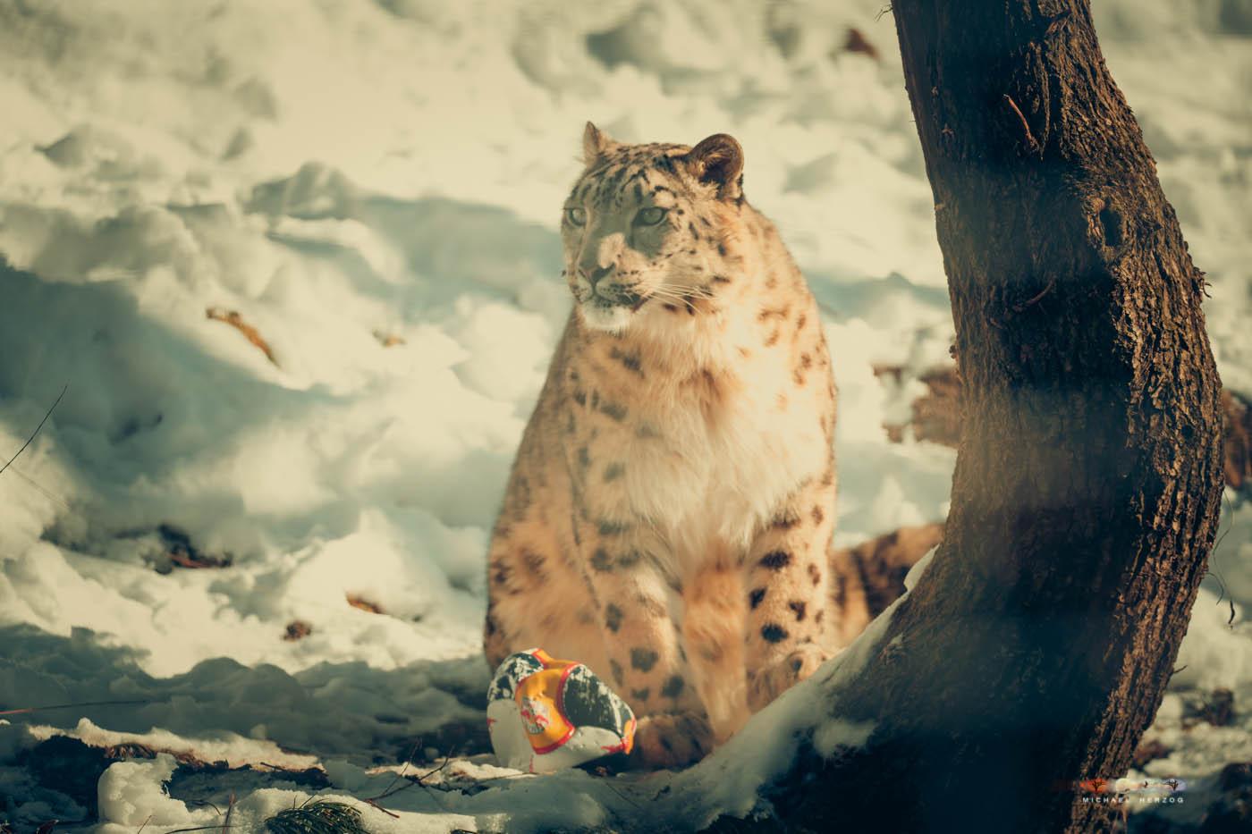 Zoo_Salzburg_MichaelHerzog-7530.jpg