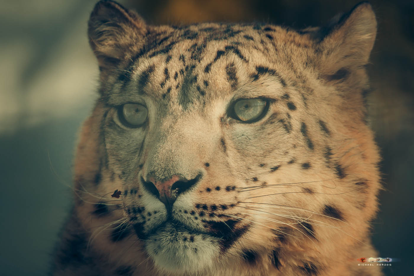 Zoo_Salzburg_MichaelHerzog-7557.jpg