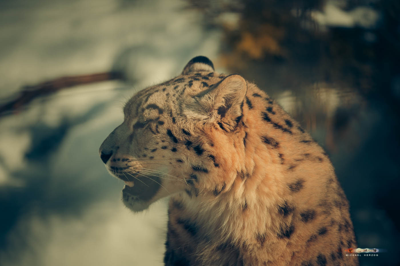 Zoo_Salzburg_MichaelHerzog-7569.jpg