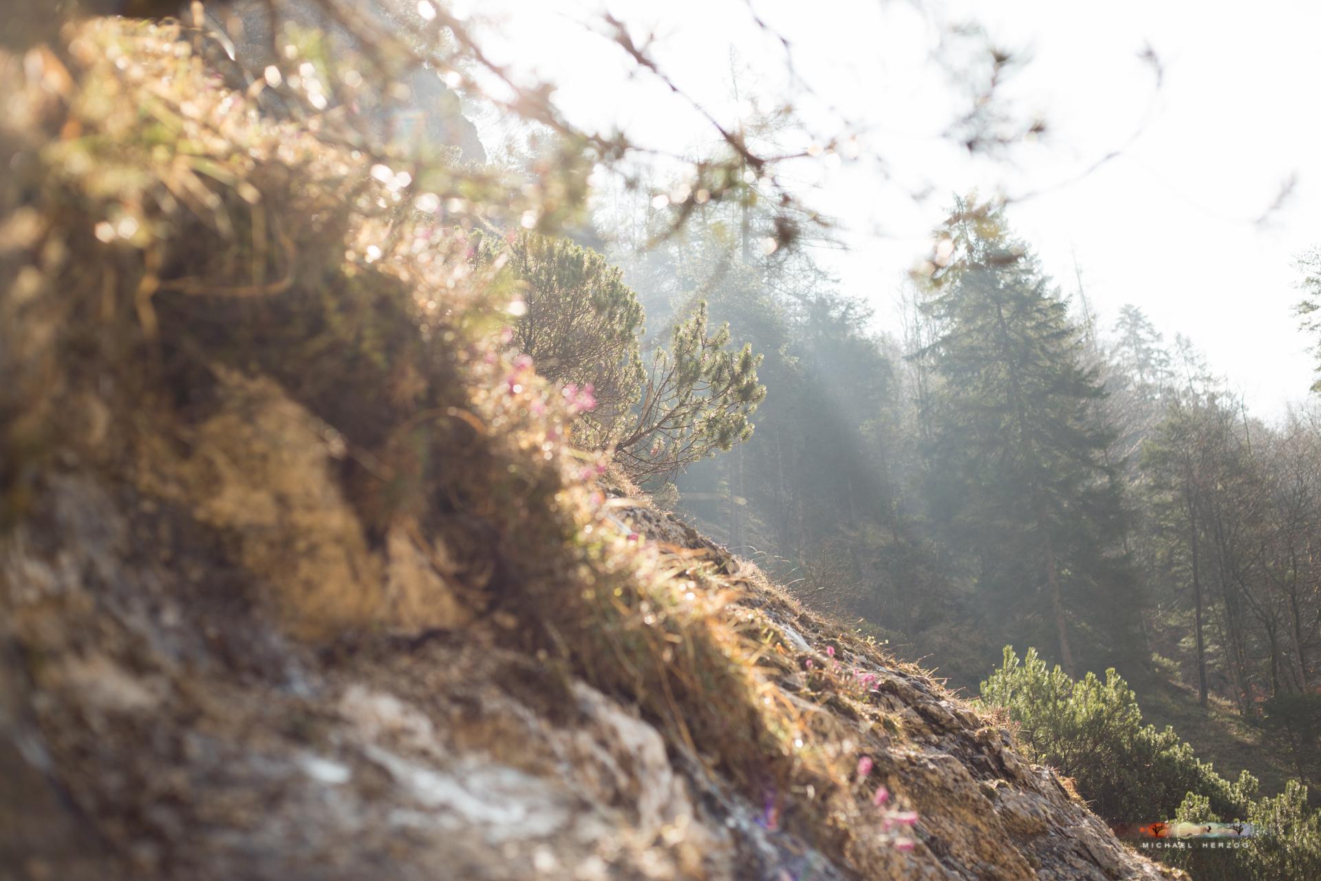 Wandern-AschauerKlamm2017_byMichaelHerzog-9564.jpg