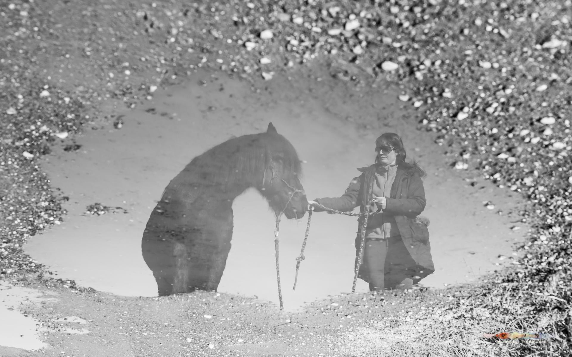 Pferd_Sonja_MichaelHerzog-8158.jpg