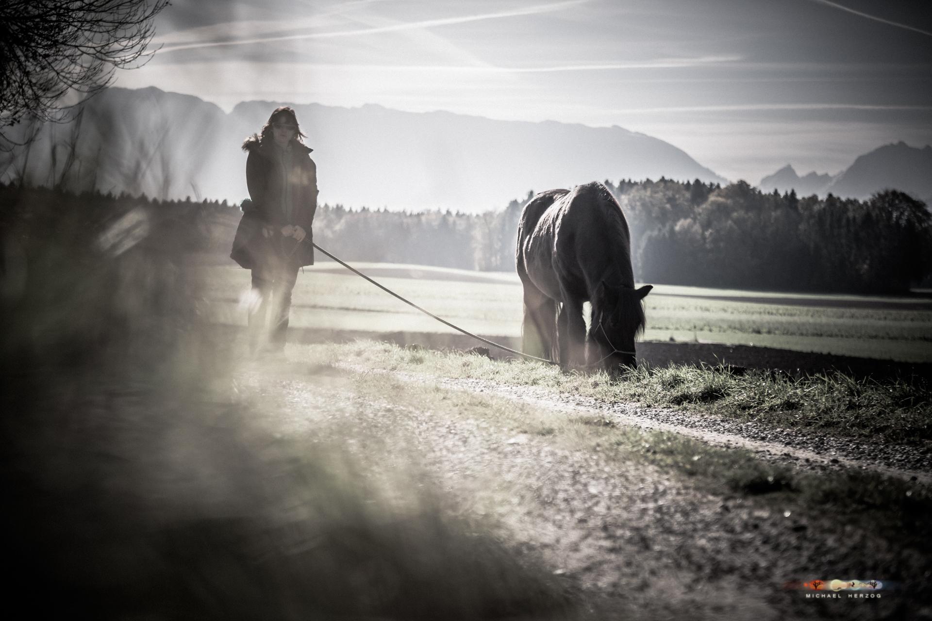 Pferd_Sonja_MichaelHerzog_web-8080.jpg