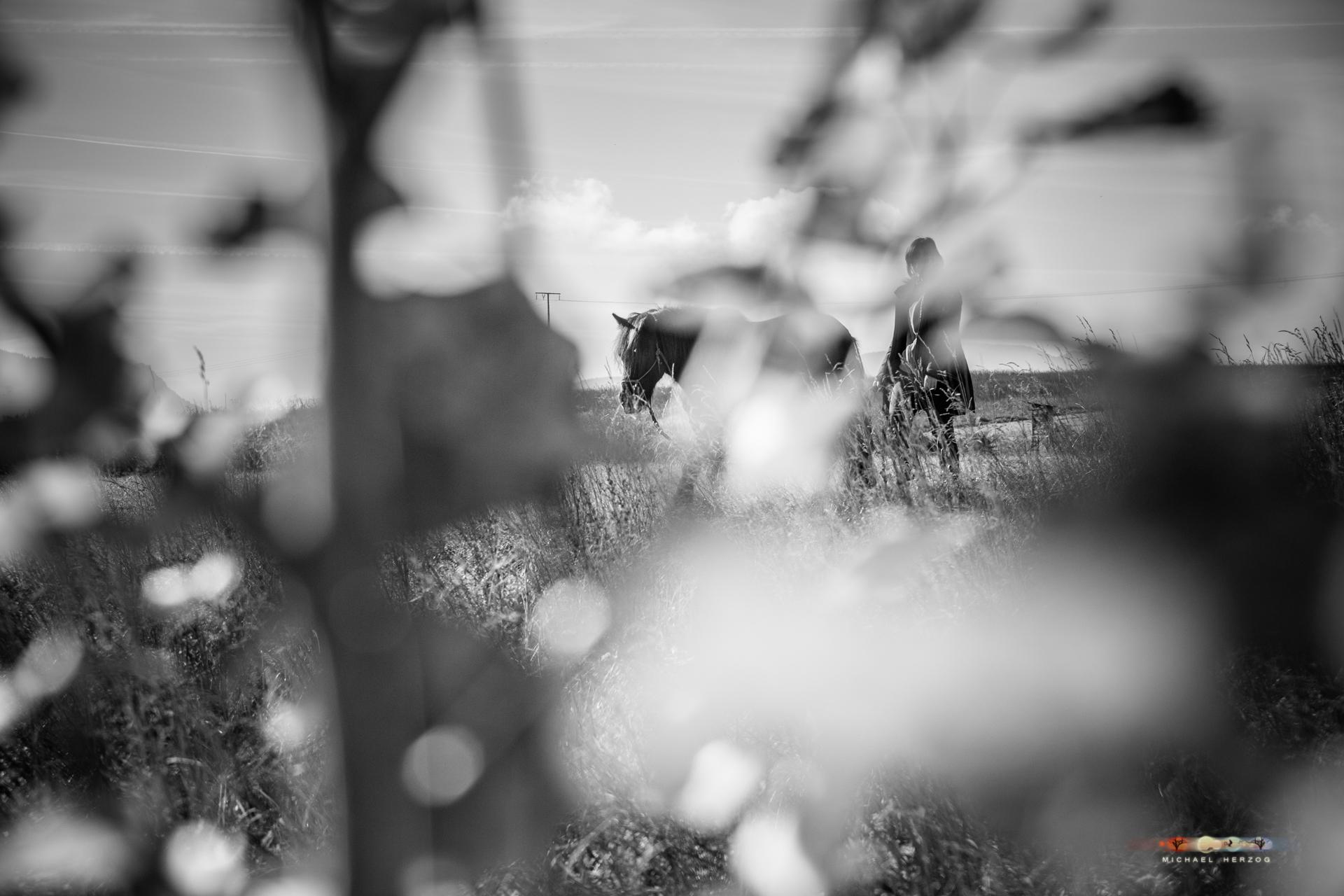 Pferd_Sonja_MichaelHerzog_web-8246.jpg