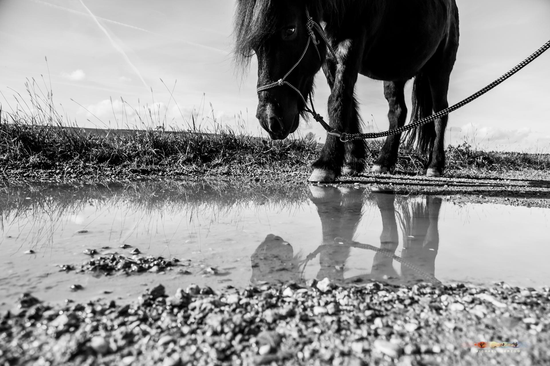 Pferd_Sonja_MichaelHerzog_web-8274.jpg