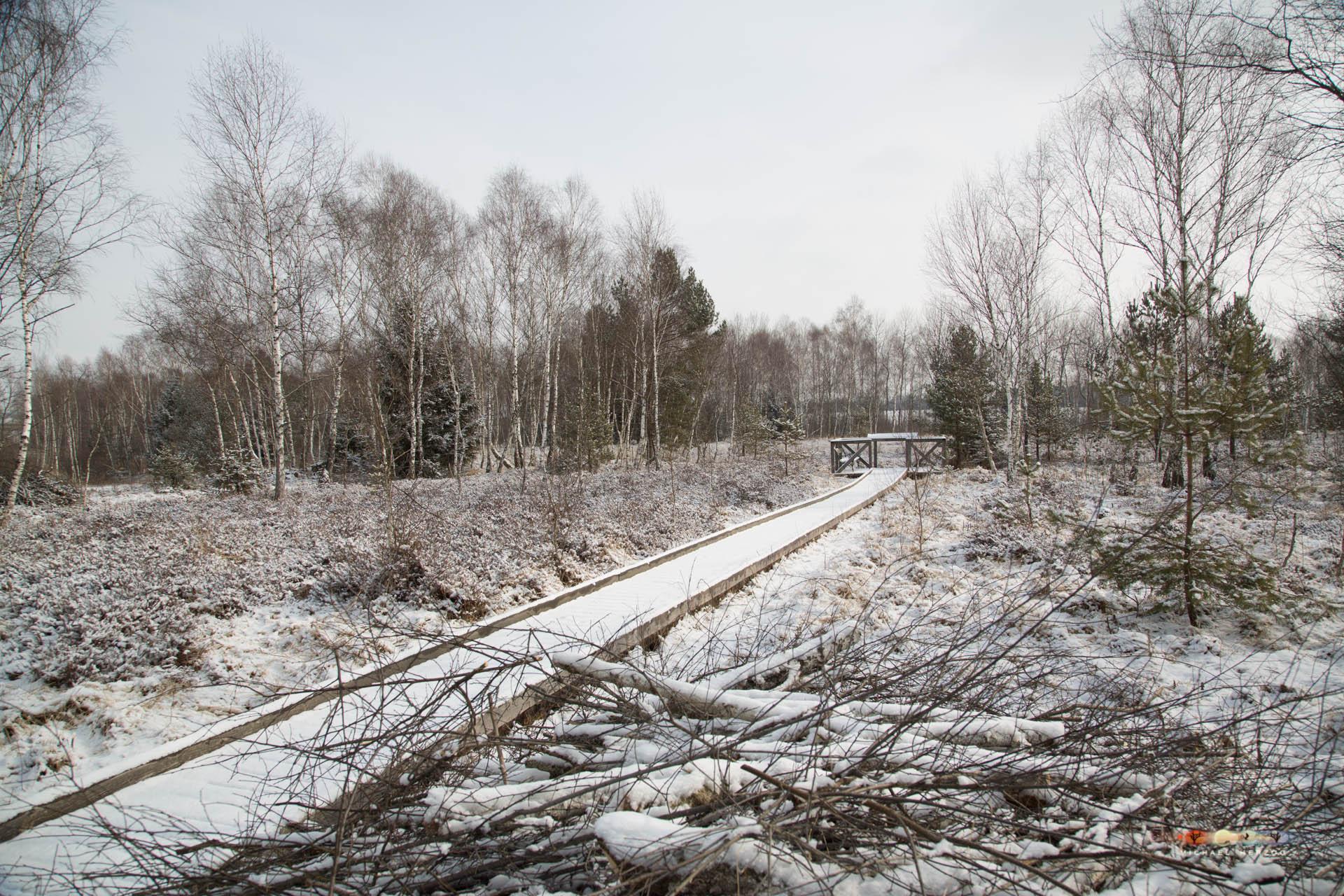 Weidmoos_SibirischeKälte_Frühling2018_MichaelHerzog-2164.jpg