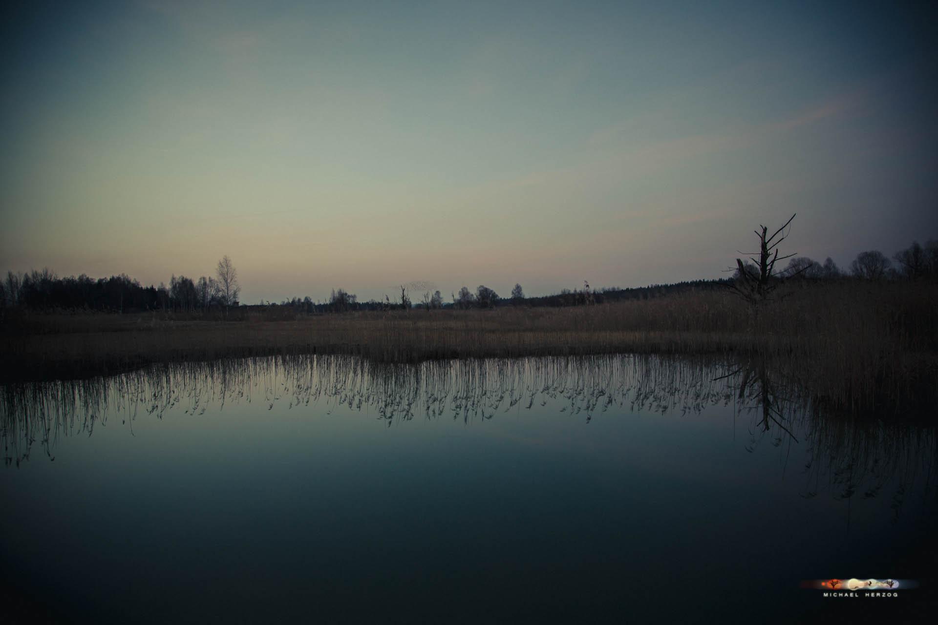 Weidmoos-Abend_Frühling2018_MichaelHerzog-2985.jpg