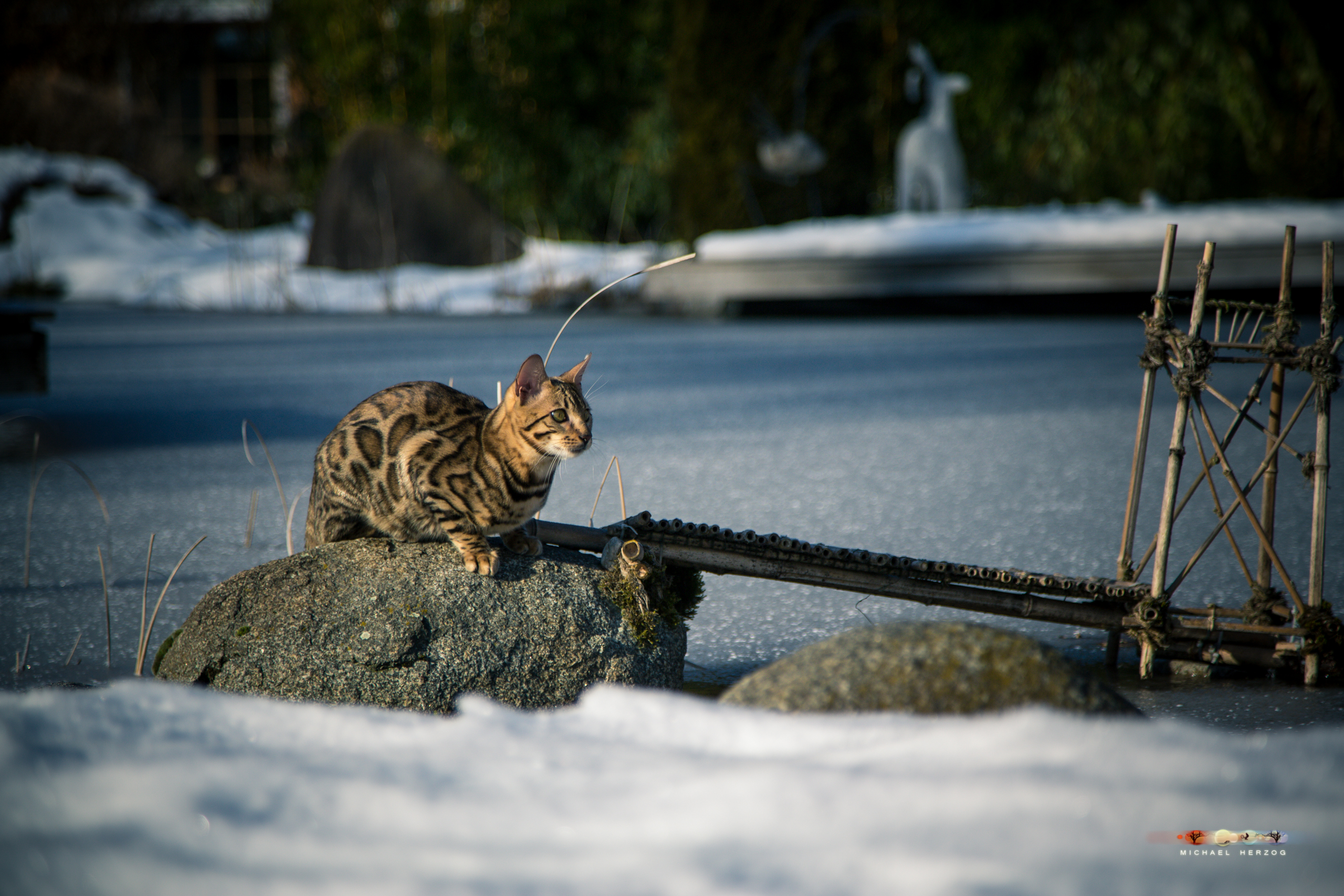 BALUARI_Winter2019_Garten_MichaelHerzog-8387.jpg