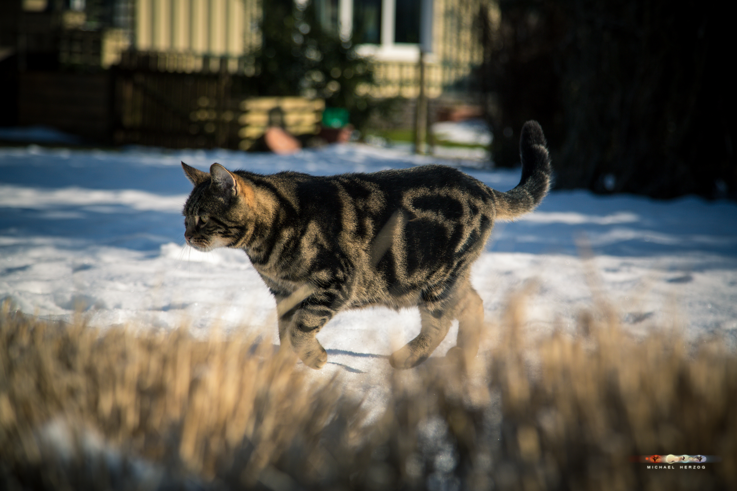 BALUARI_Winter2019_Garten_MichaelHerzog-8453.jpg