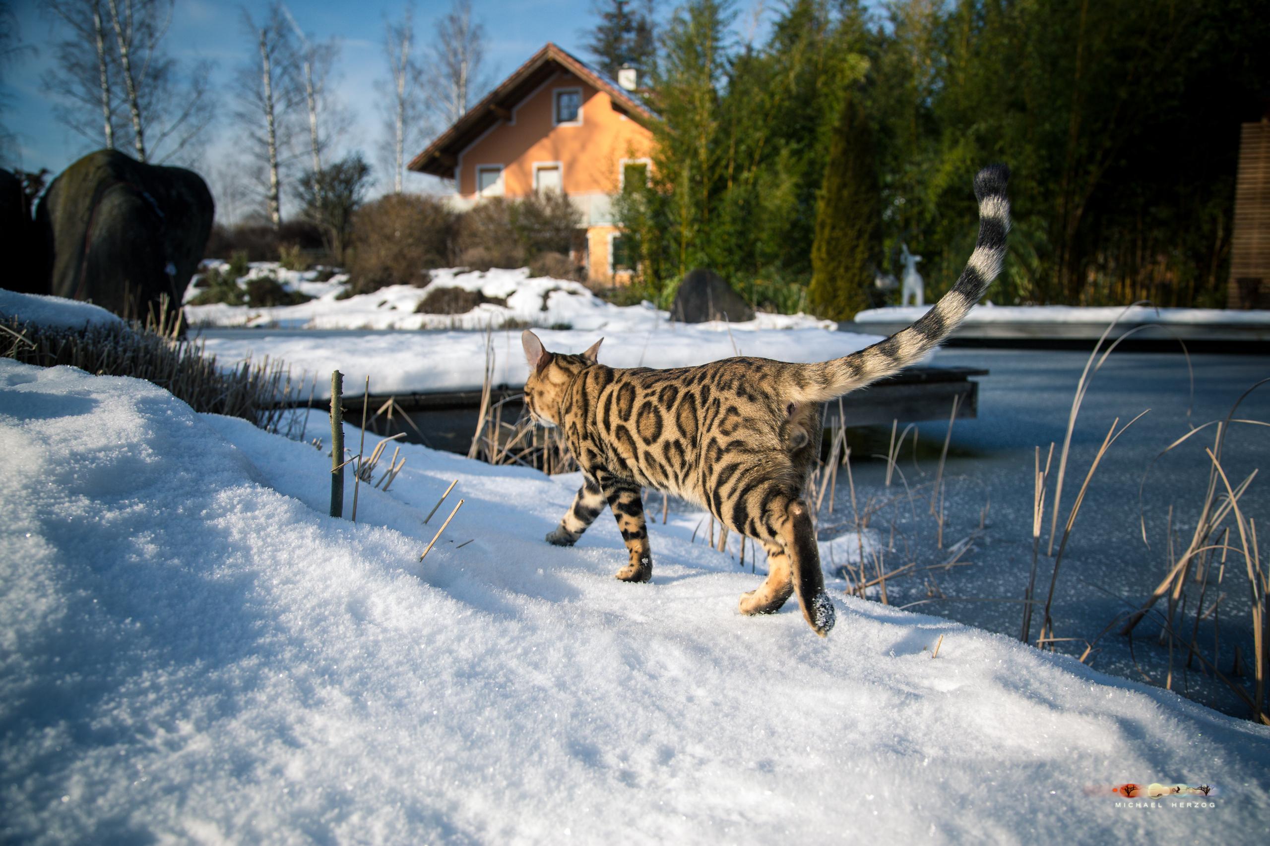BALUARI_Winter2019_Garten_MichaelHerzog-8507.jpg