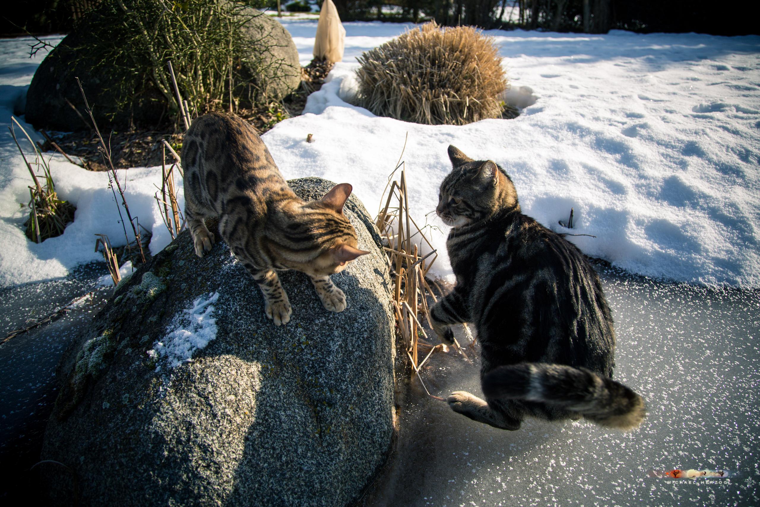 BALUARI_Winter2019_Garten_MichaelHerzog-8564.jpg