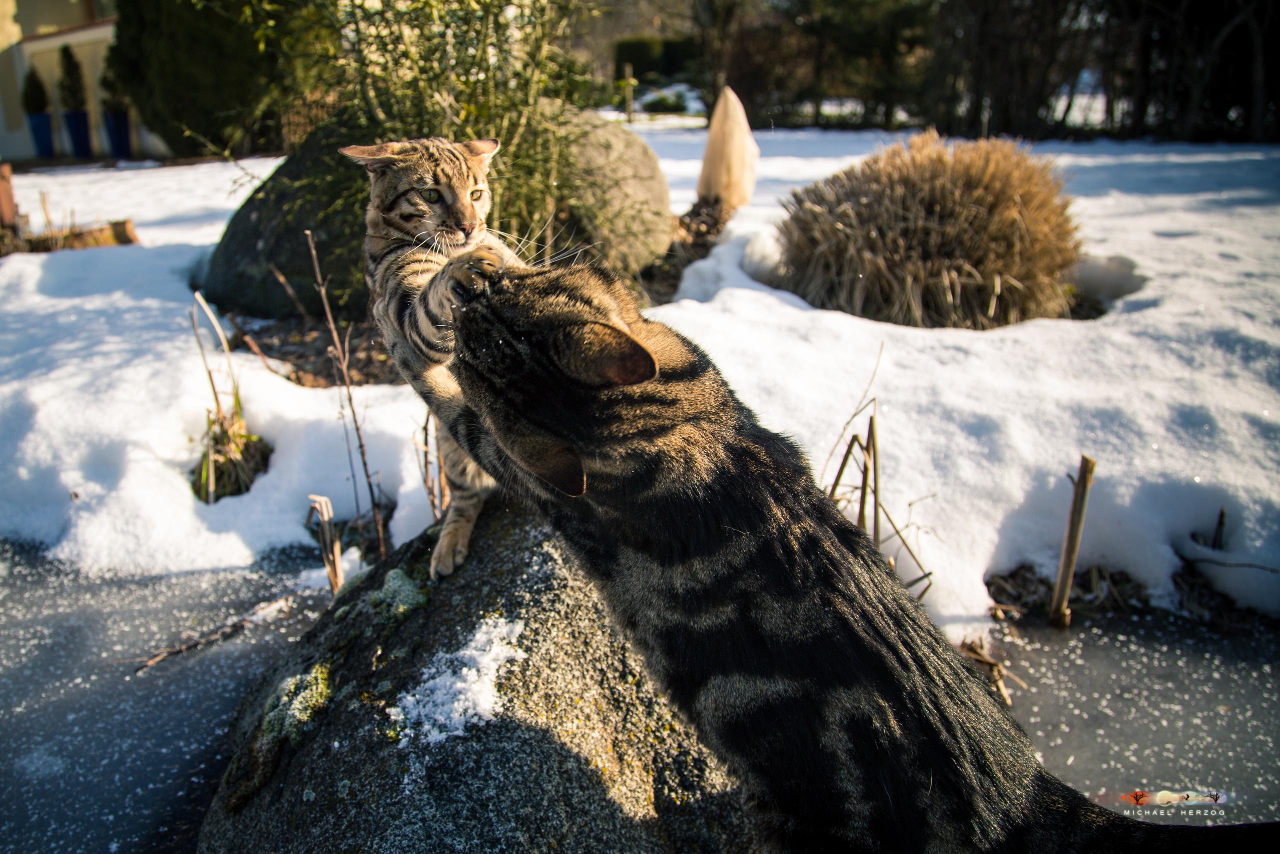 BALUARI_Winter2019_Garten_MichaelHerzog-8568.jpg