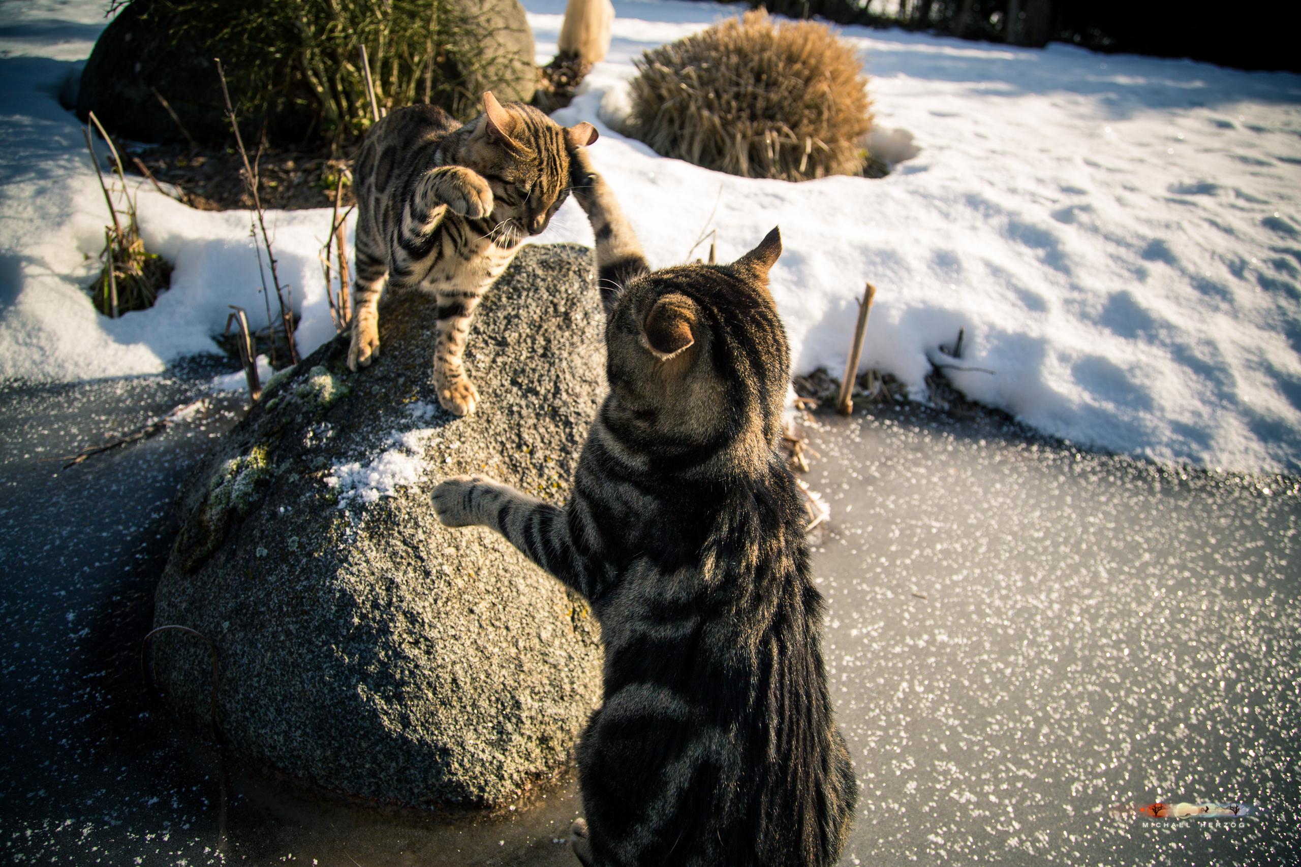 BALUARI_Winter2019_Garten_MichaelHerzog-8573.jpg
