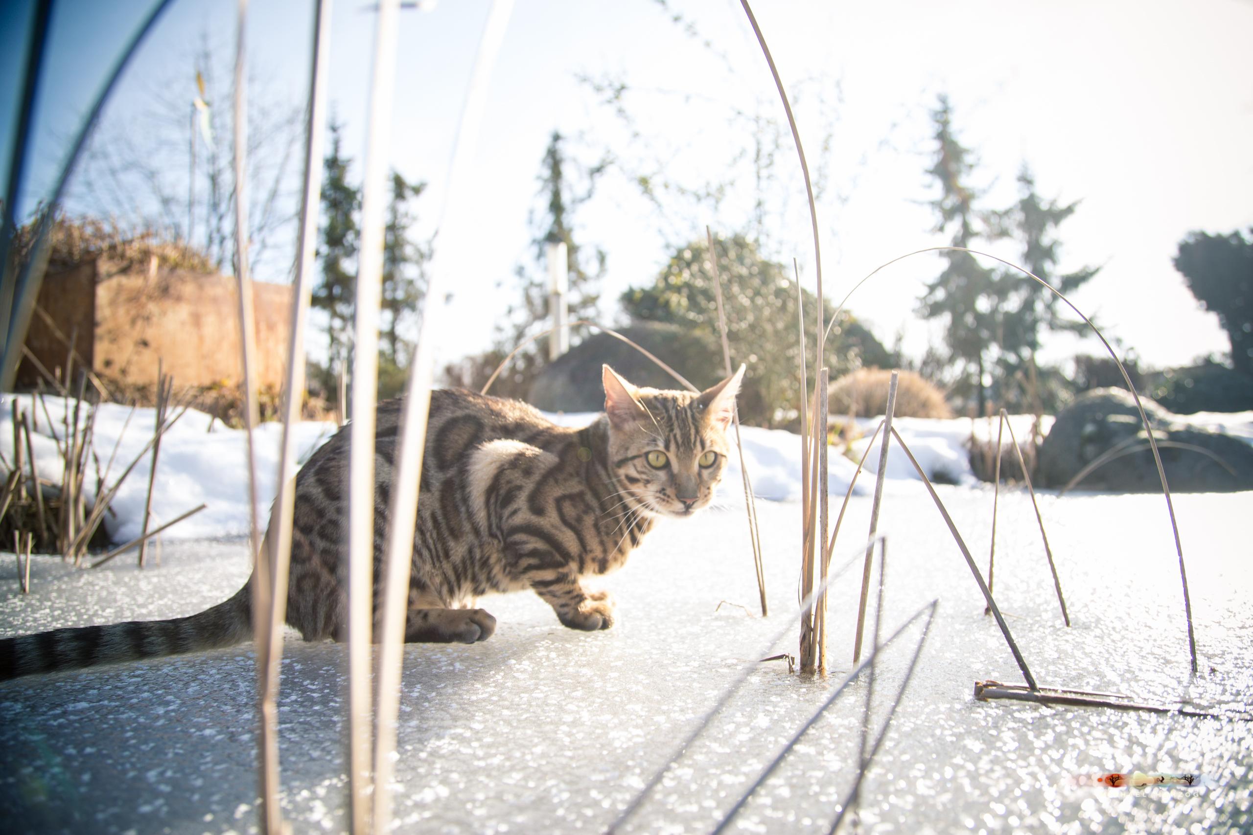 BALUARI_Winter2019_Garten_MichaelHerzog-8614.jpg