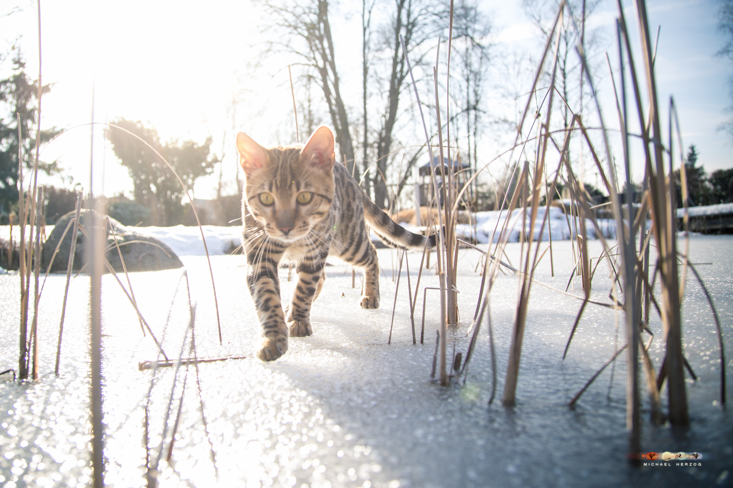 BALUARI_Winter2019_Garten_MichaelHerzog-8675-2.jpg