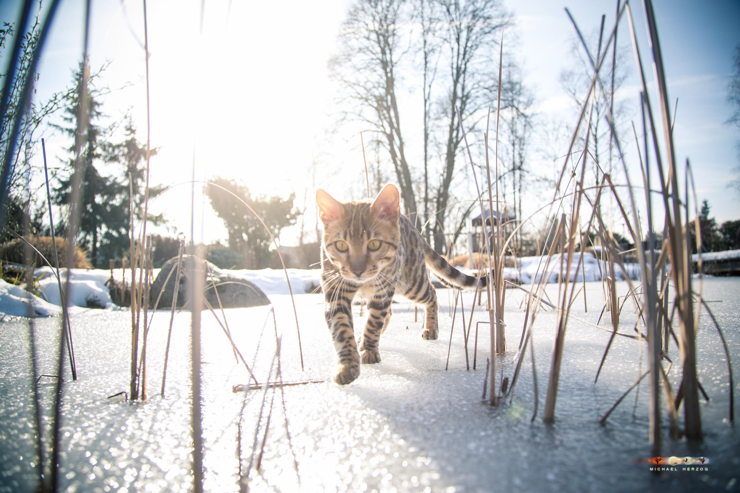 BALUARI_Winter2019_Garten_MichaelHerzog-8675.jpg