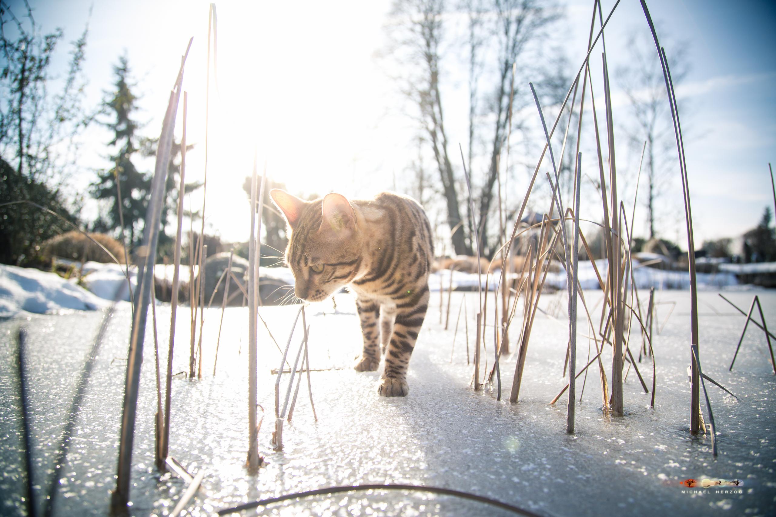BALUARI_Winter2019_Garten_MichaelHerzog-8677.jpg