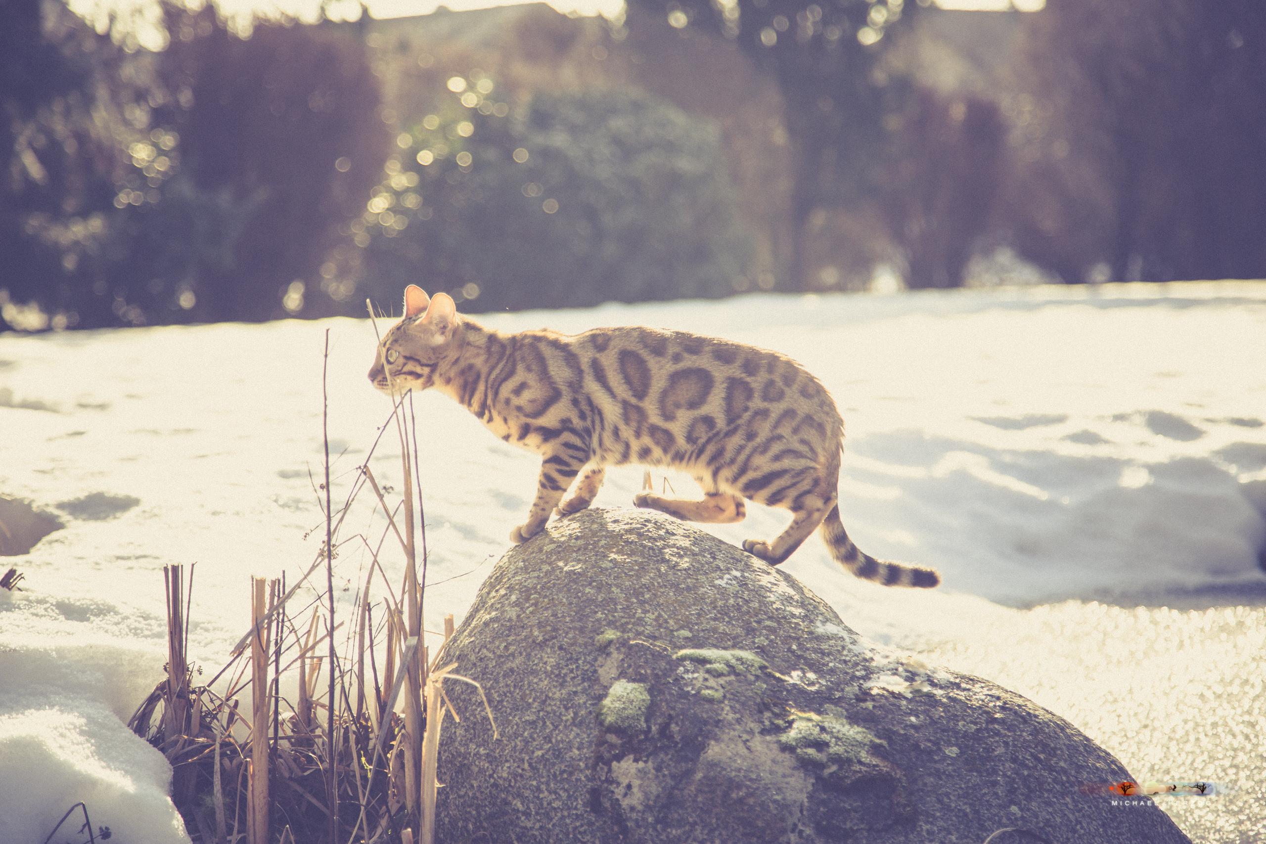 BALUARI_Winter2019_Garten_MichaelHerzog-8741.jpg