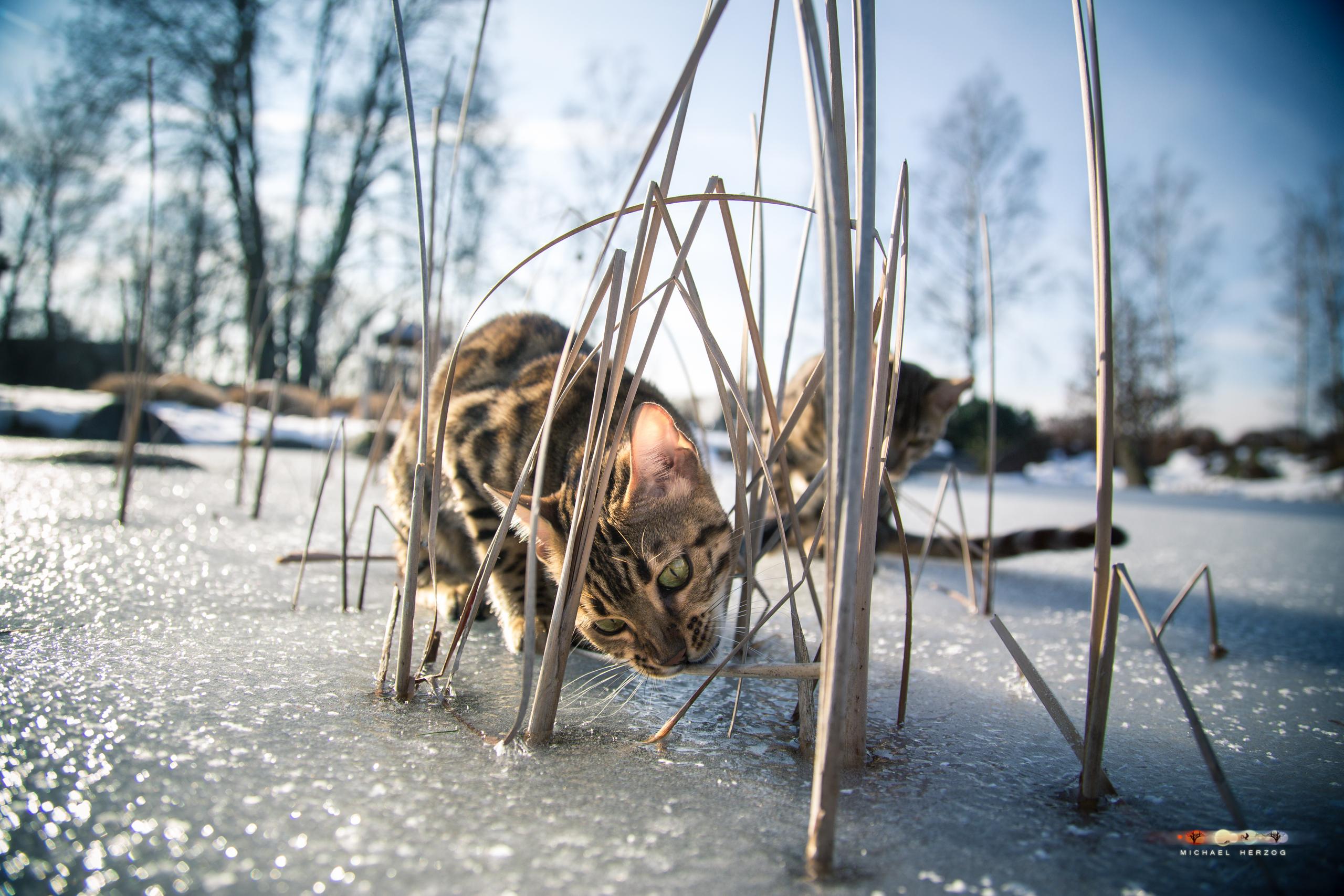 BALUARI_Winter2019_Garten_MichaelHerzog-8793.jpg