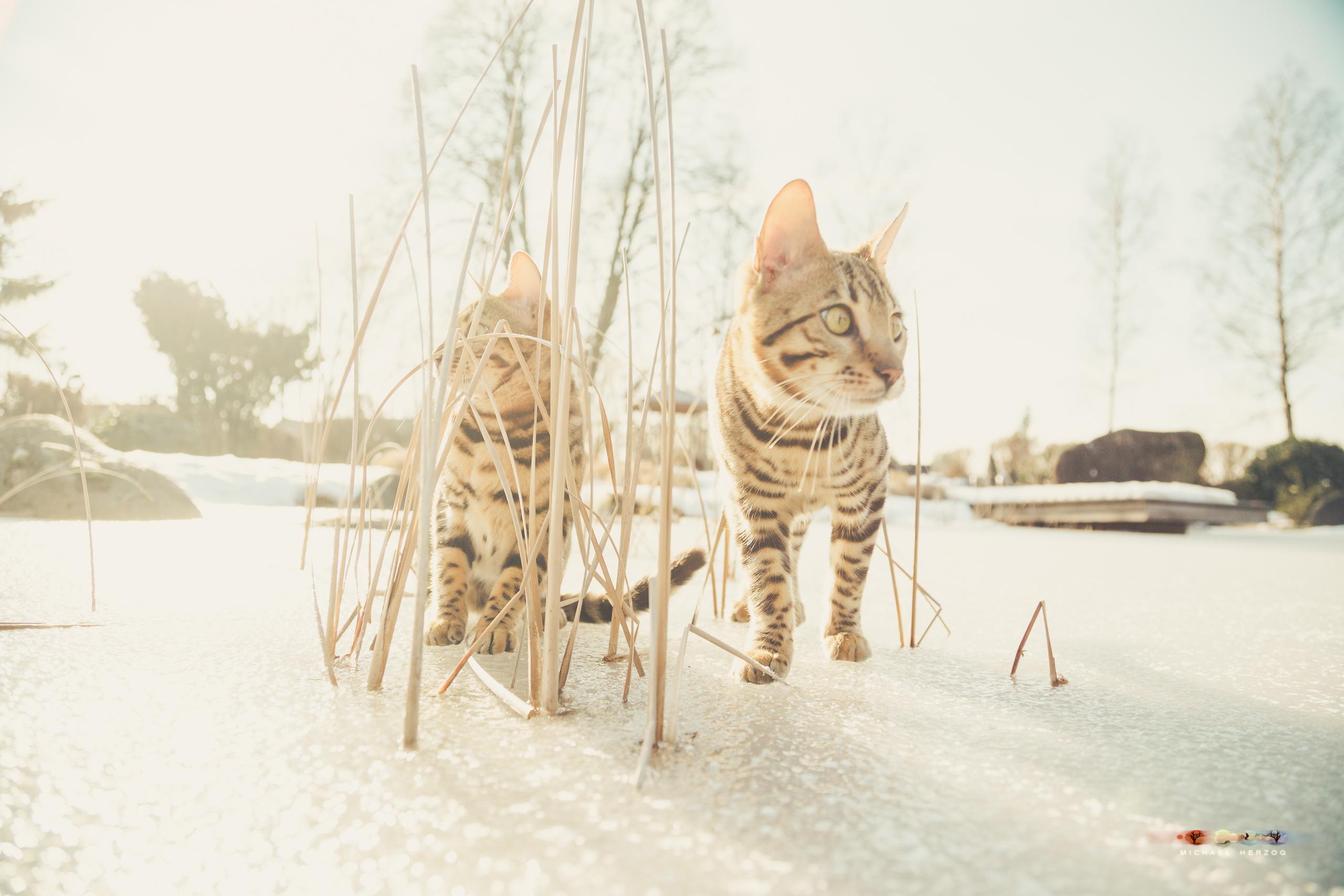 BALUARI_Winter2019_Garten_MichaelHerzog-8802.jpg