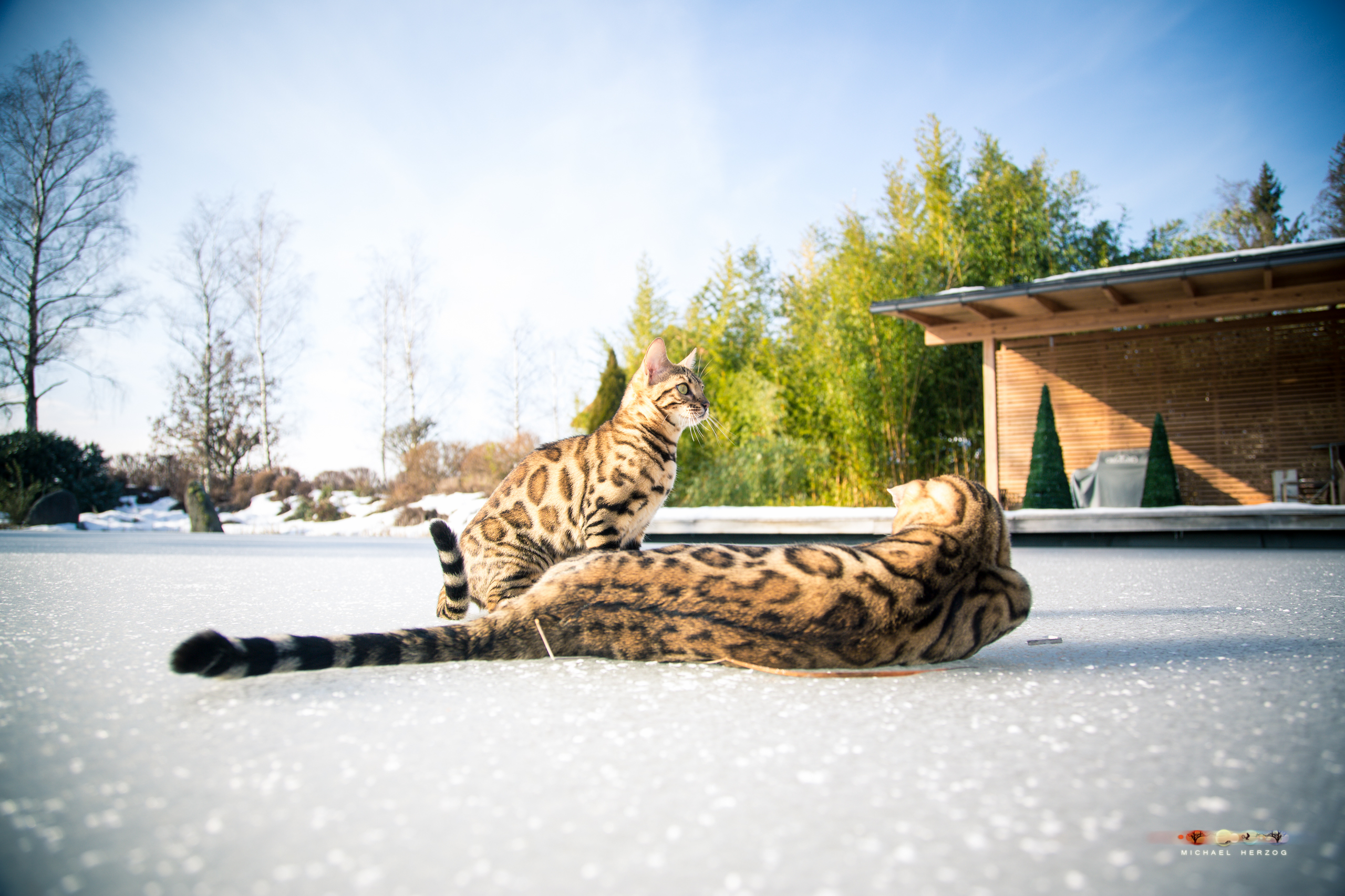 BALUARI_Winter2019_Garten_MichaelHerzog-8881.jpg