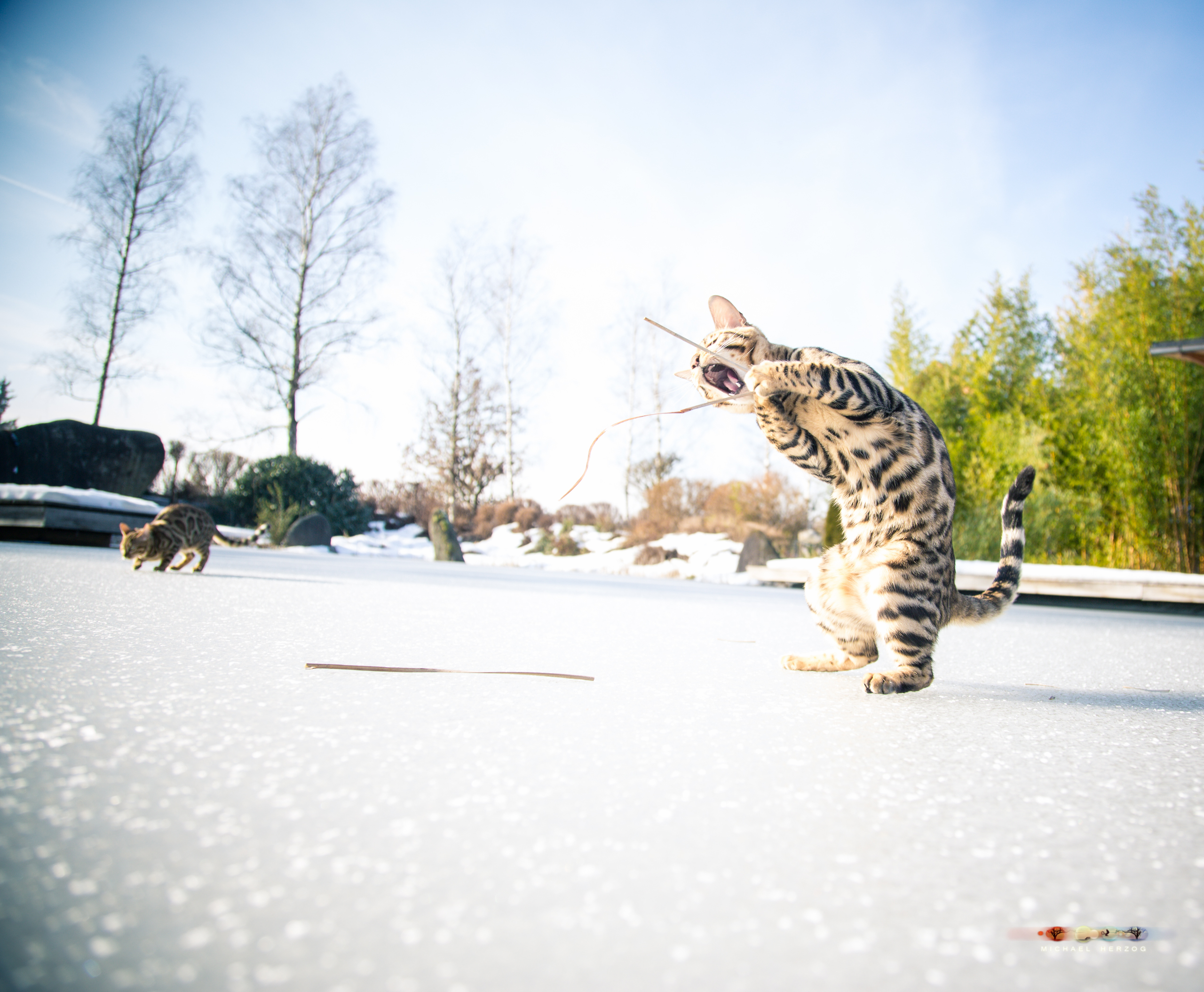 BALUARI_Winter2019_Garten_MichaelHerzog-8883.jpg