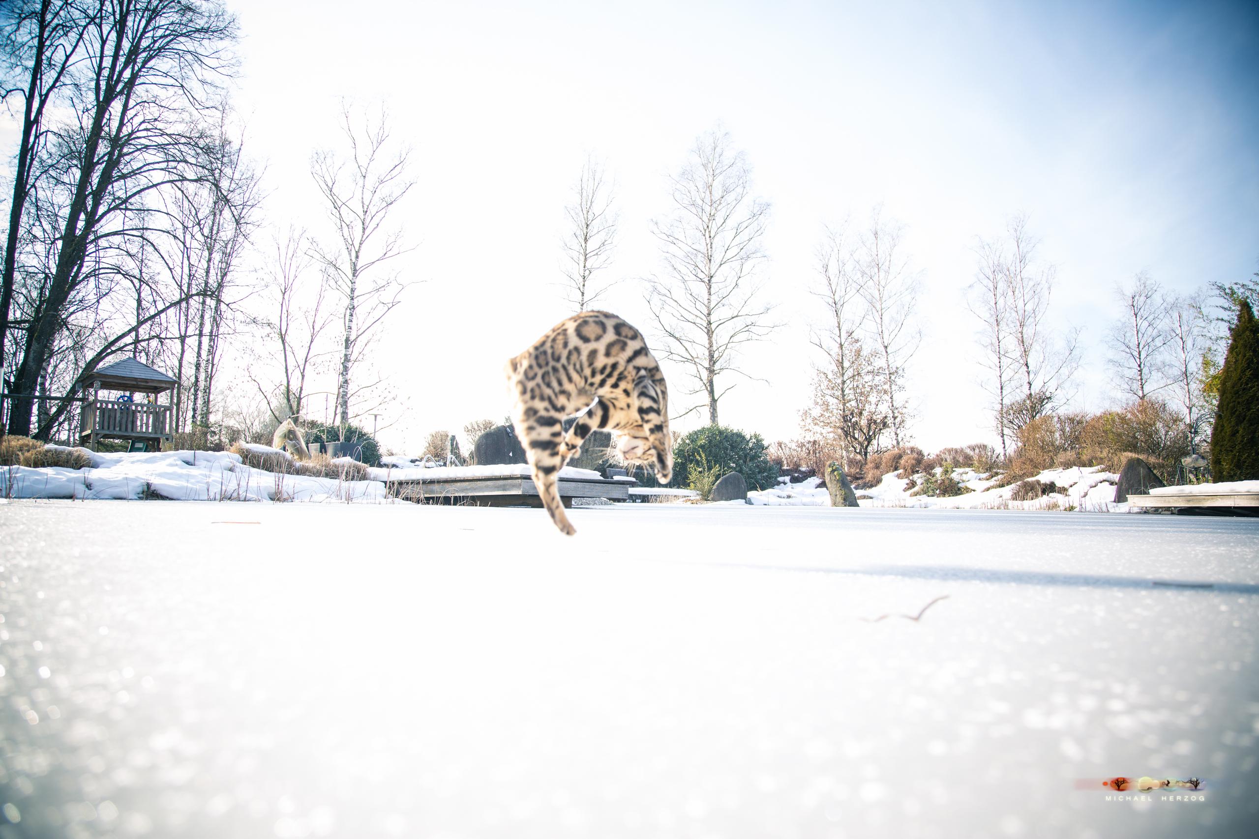 BALUARI_Winter2019_Garten_MichaelHerzog-8934.jpg