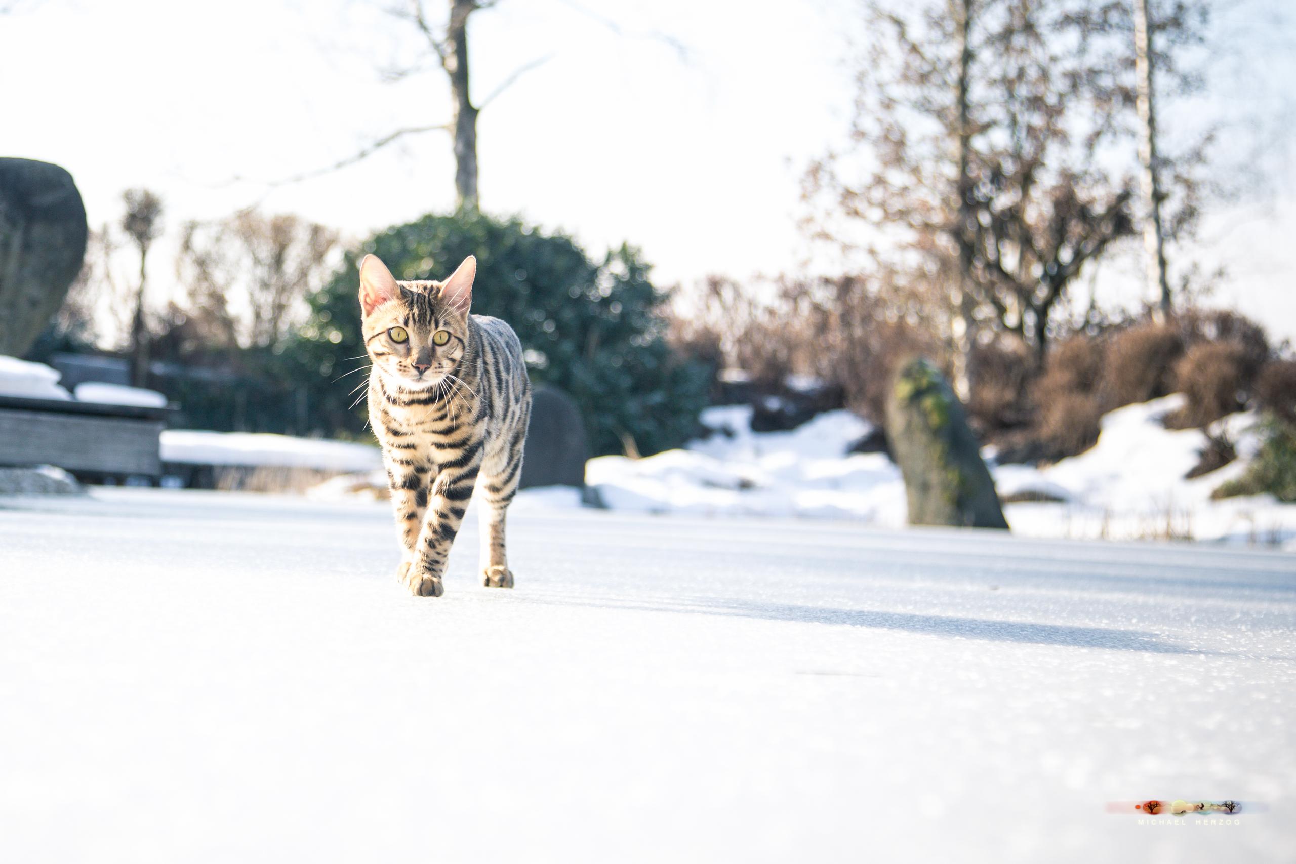 BALUARI_Winter2019_Garten_MichaelHerzog-8952.jpg