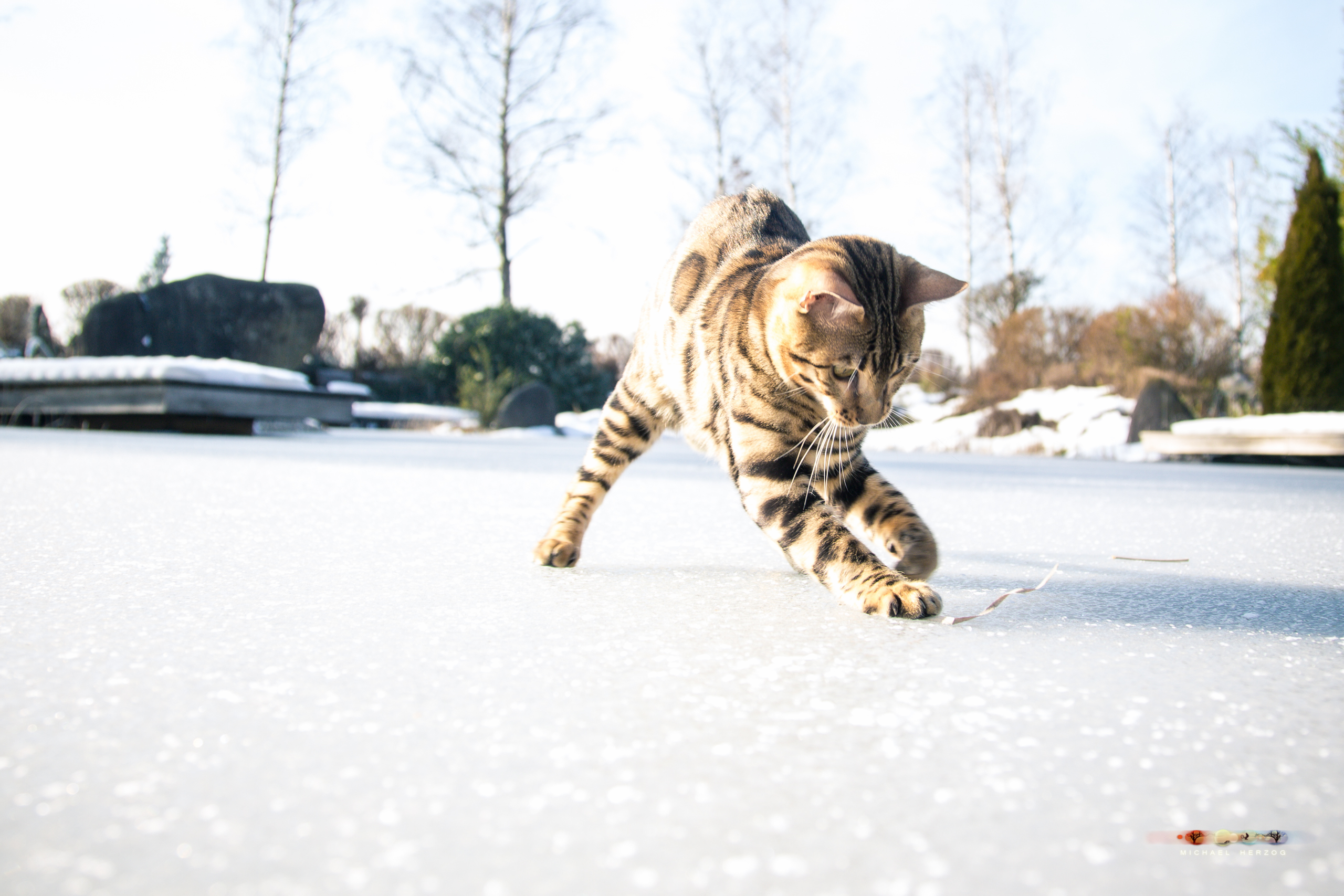 BALUARI_Winter2019_Garten_MichaelHerzog-8956.jpg
