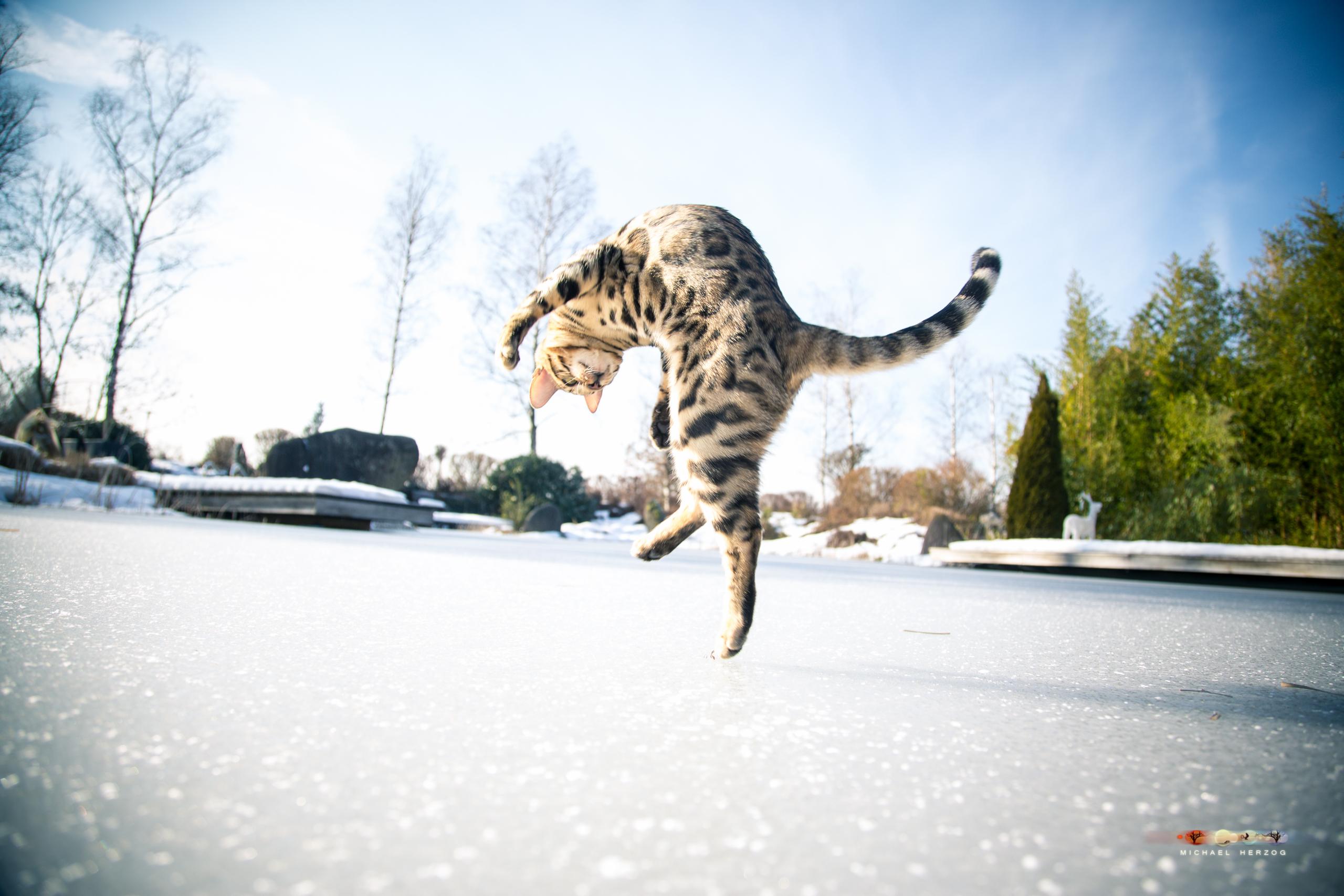 BALUARI_Winter2019_Garten_MichaelHerzog-8960.jpg