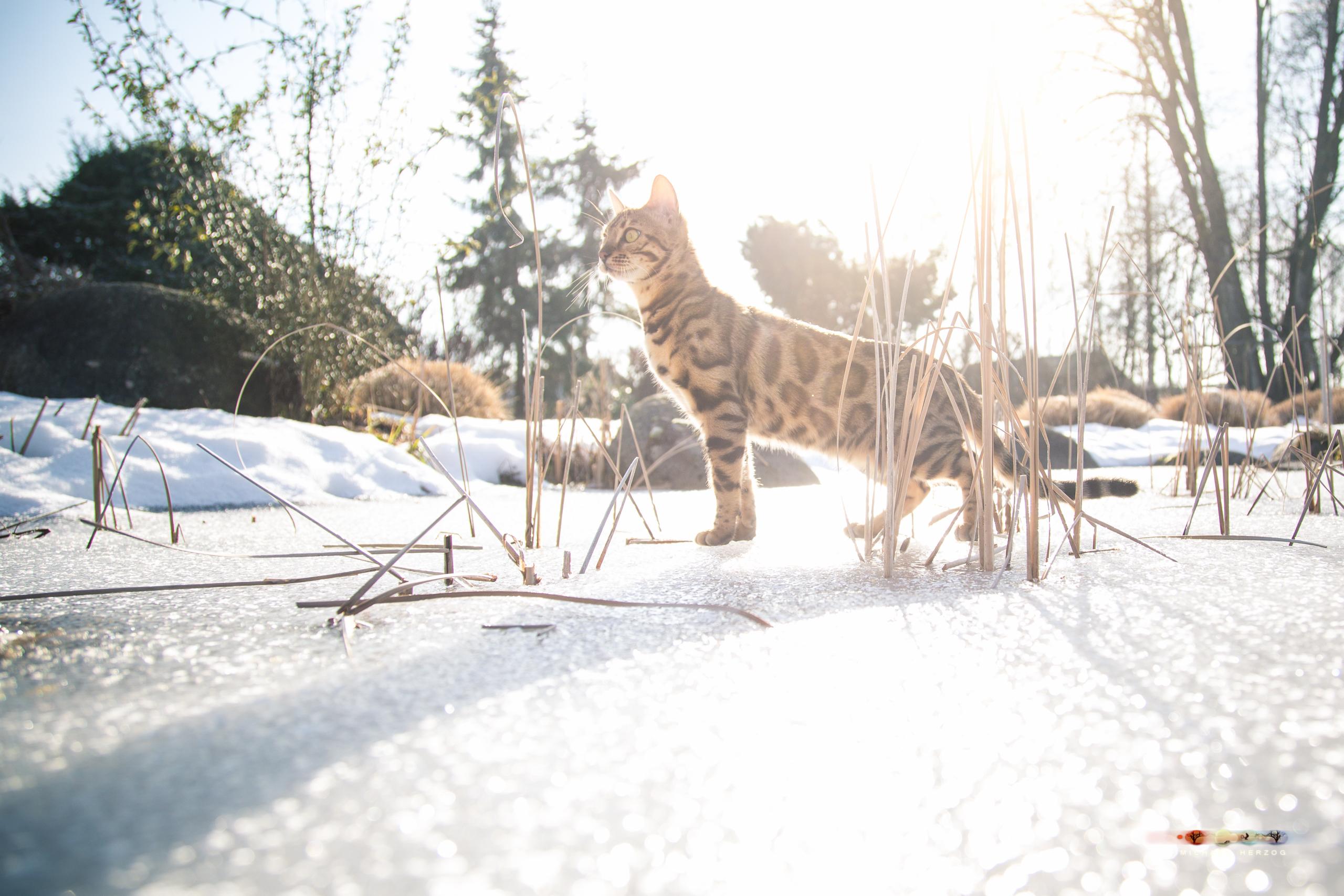 BALUARI_Winter2019_Garten_MichaelHerzog-8976.jpg