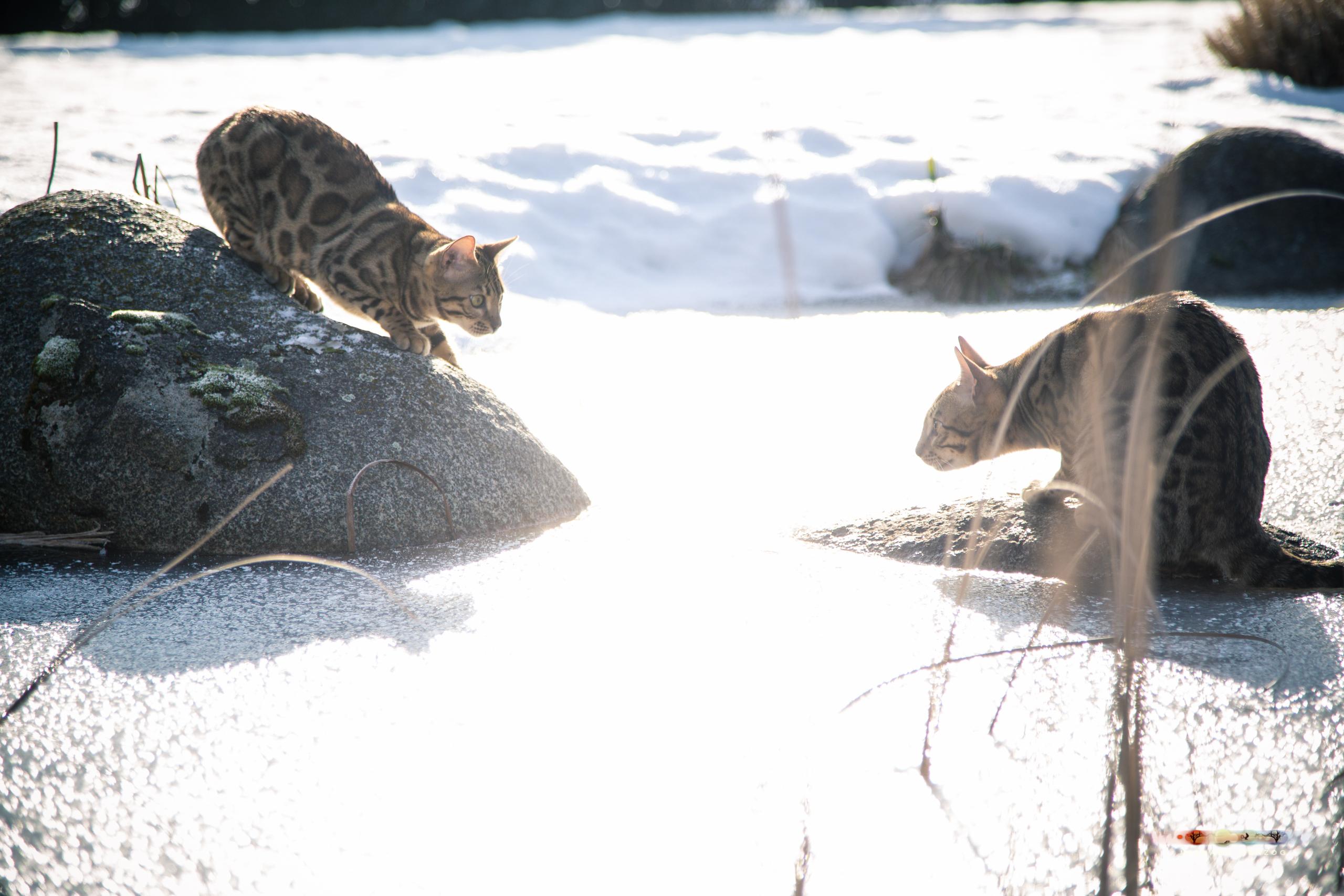 BALUARI_Winter2019_Garten_MichaelHerzog-8996.jpg